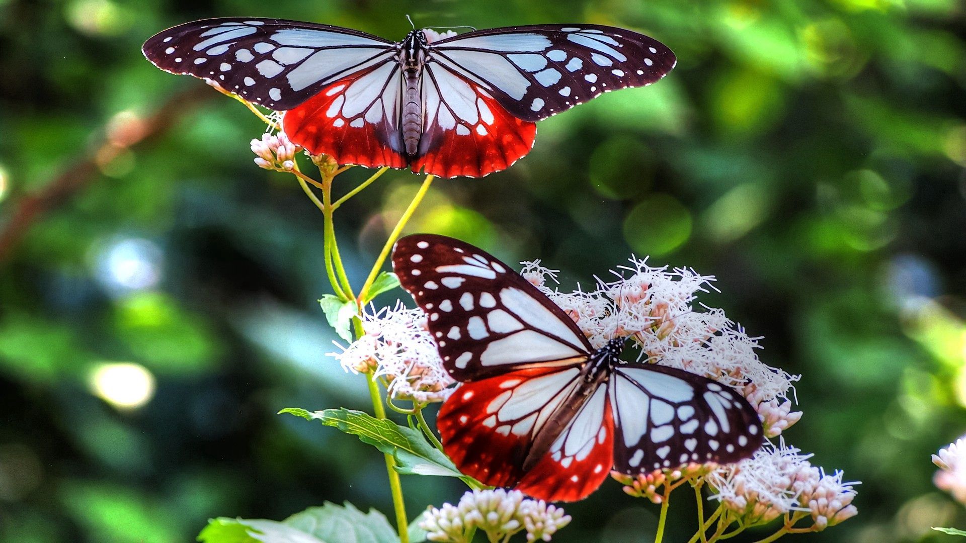 146660 download wallpaper Butterflies, Patterns, Macro, Lines, Insect screensavers and pictures for free
