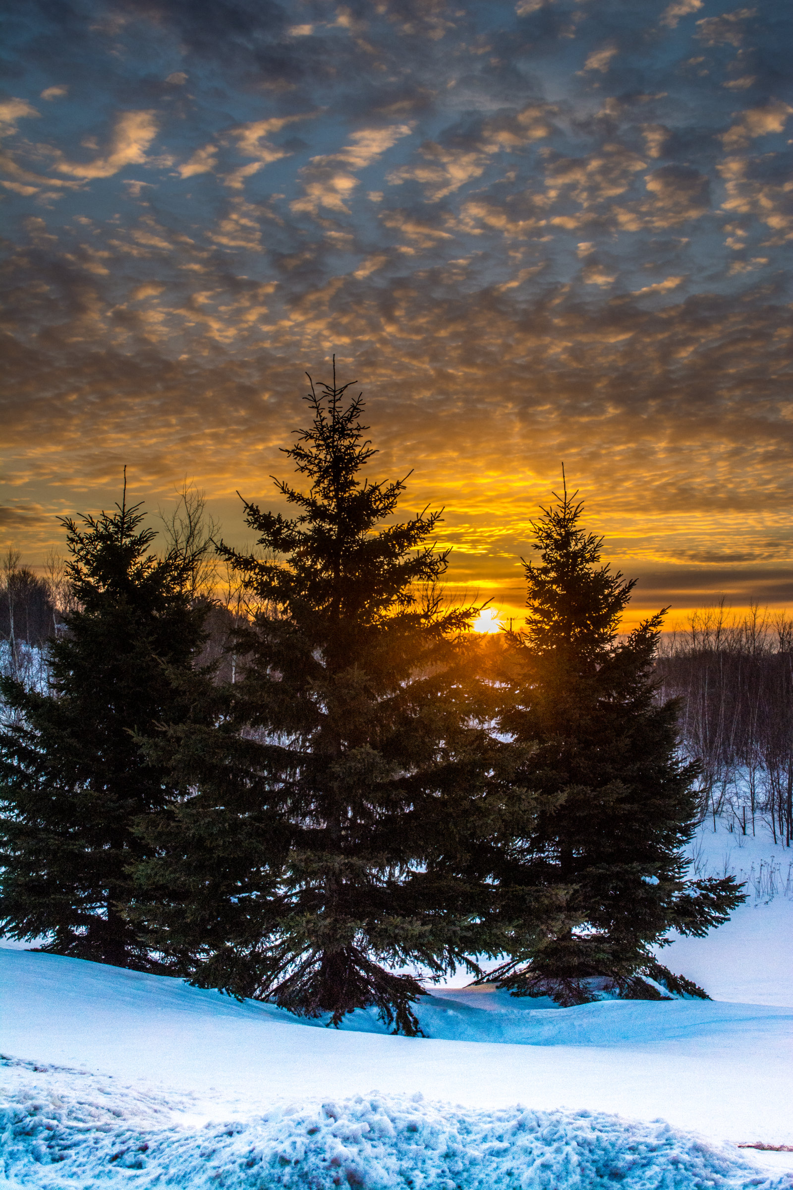 140617 download wallpaper Nature, Trees, Sunset, Snow, Winter, Landscape, Fir-Trees screensavers and pictures for free