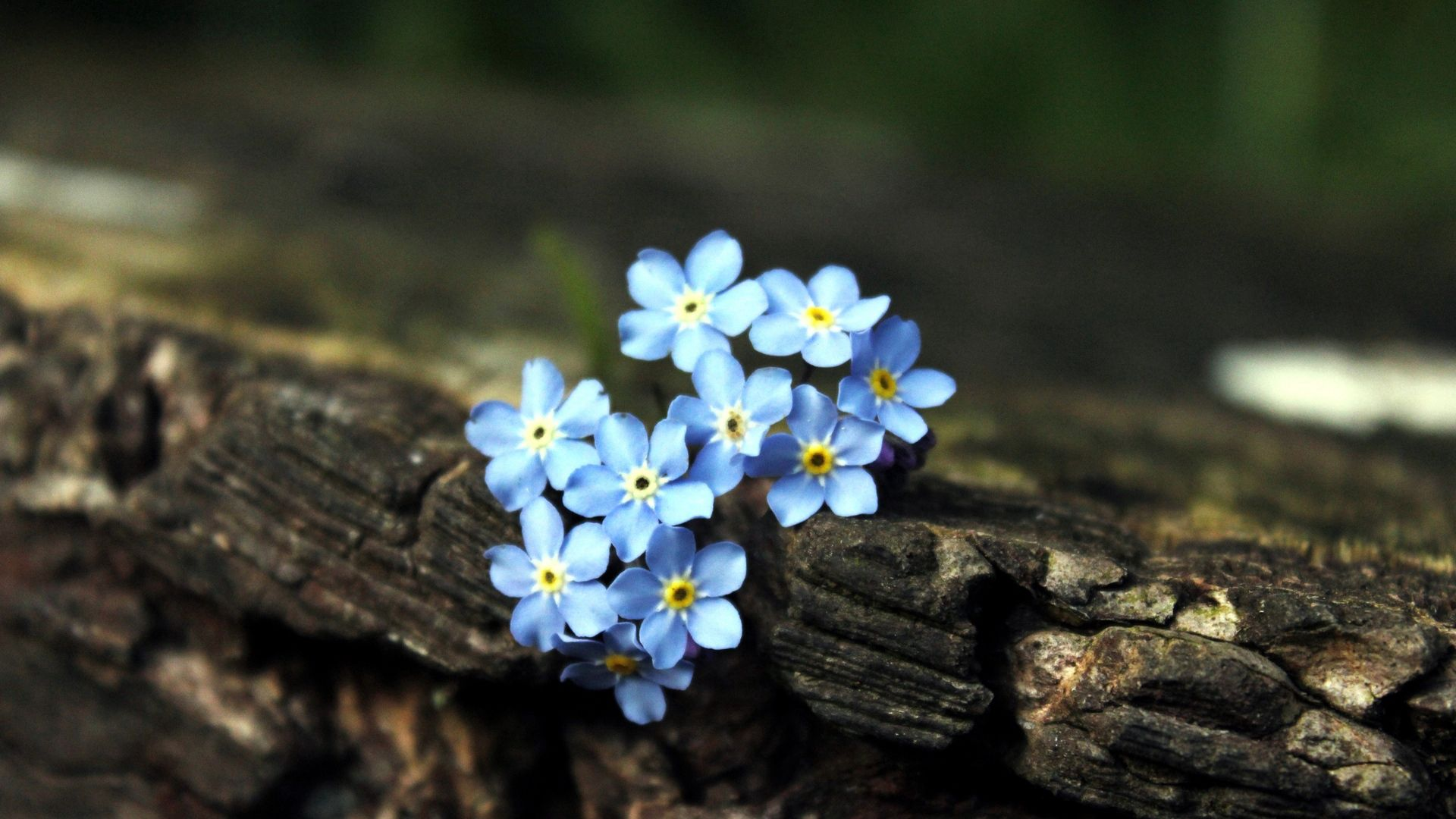 144948 free wallpaper 480x800 for phone, download images Flowers, Plant, Macro, Bark, Small 480x800 for mobile