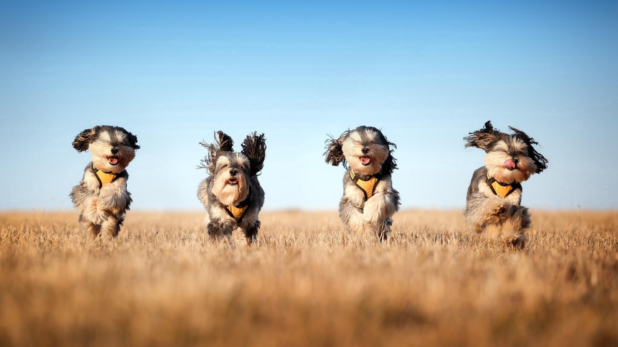 84029 download wallpaper Animals, Dogs, Run Away, Run, Grass, Wind screensavers and pictures for free