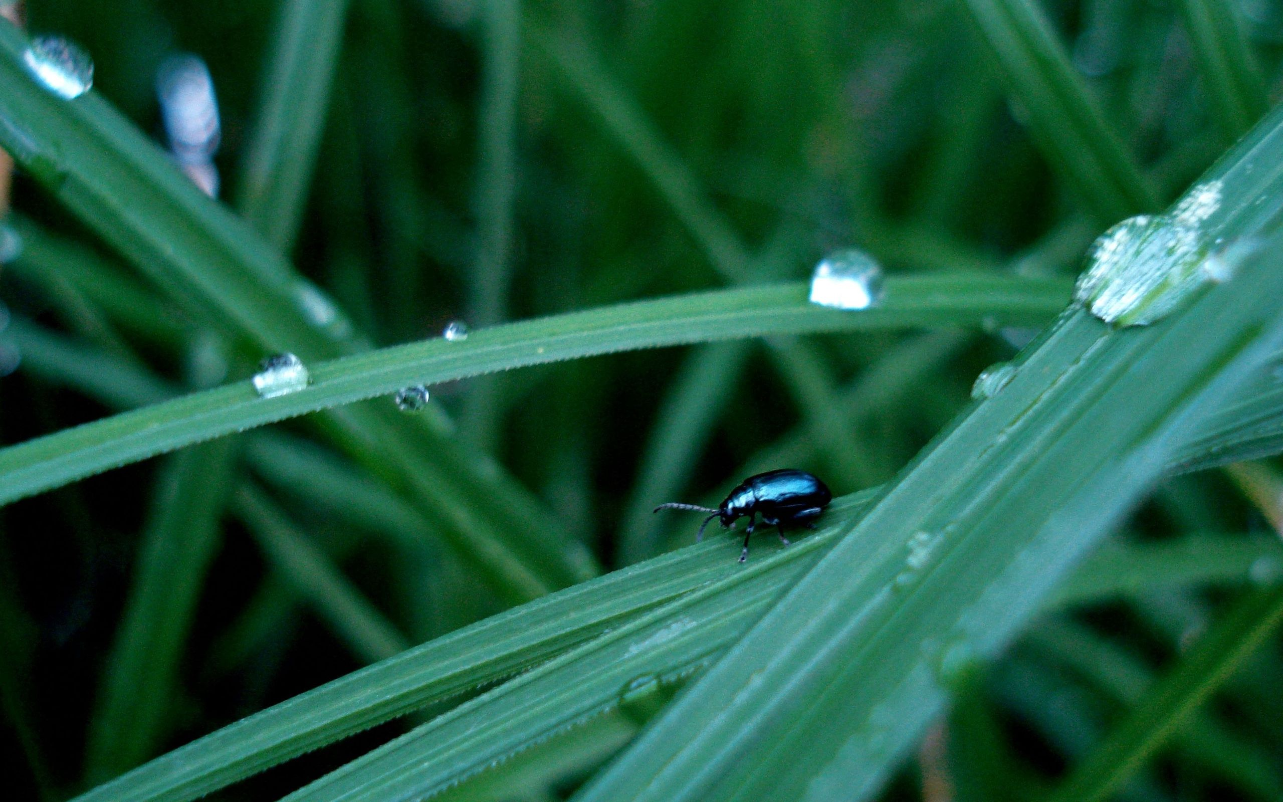 74032 download wallpaper Macro, Insect, Grass, Crawl, Thick, Grounds screensavers and pictures for free