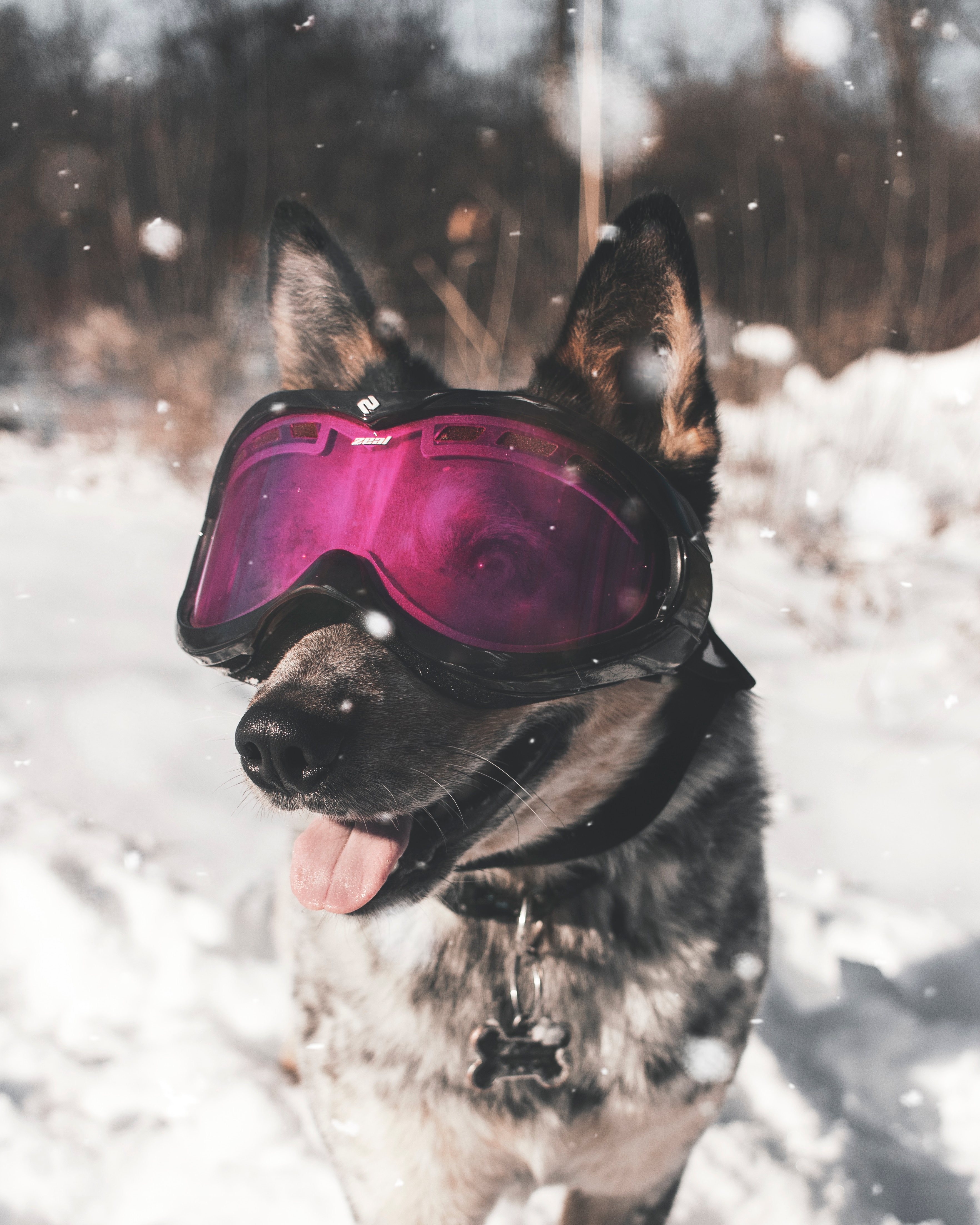 117336 download wallpaper Animals, Dog, Glasses, Spectacles, Winter, Cool, Stylish screensavers and pictures for free