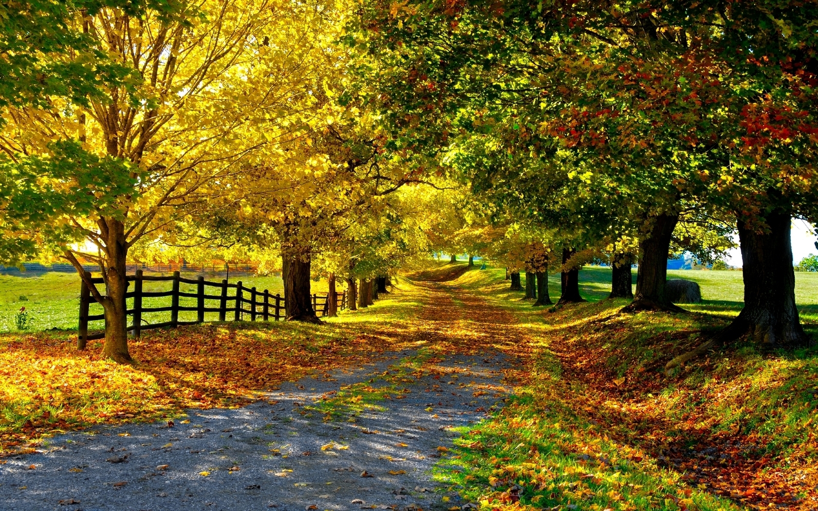 37424 скачать обои Пейзаж, Осень, Деревья - заставки и картинки бесплатно