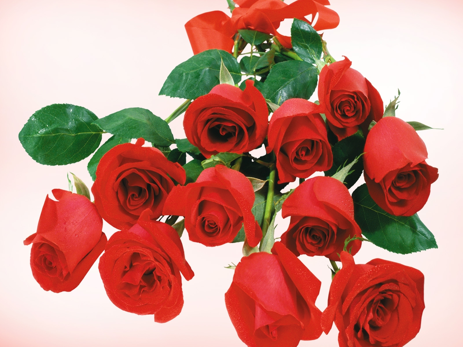 3027 download wallpaper Holidays, Plants, Flowers, Roses screensavers and pictures for free