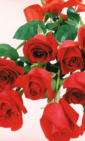 3027 скачать обои Праздники, Растения, Цветы, Розы - заставки и картинки бесплатно