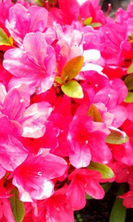 24707 скачать обои Растения, Цветы - заставки и картинки бесплатно