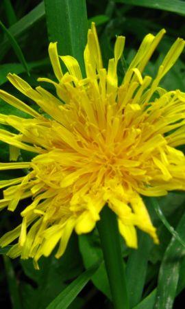 3835 descargar fondo de pantalla Plantas, Flores: protectores de pantalla e imágenes gratis