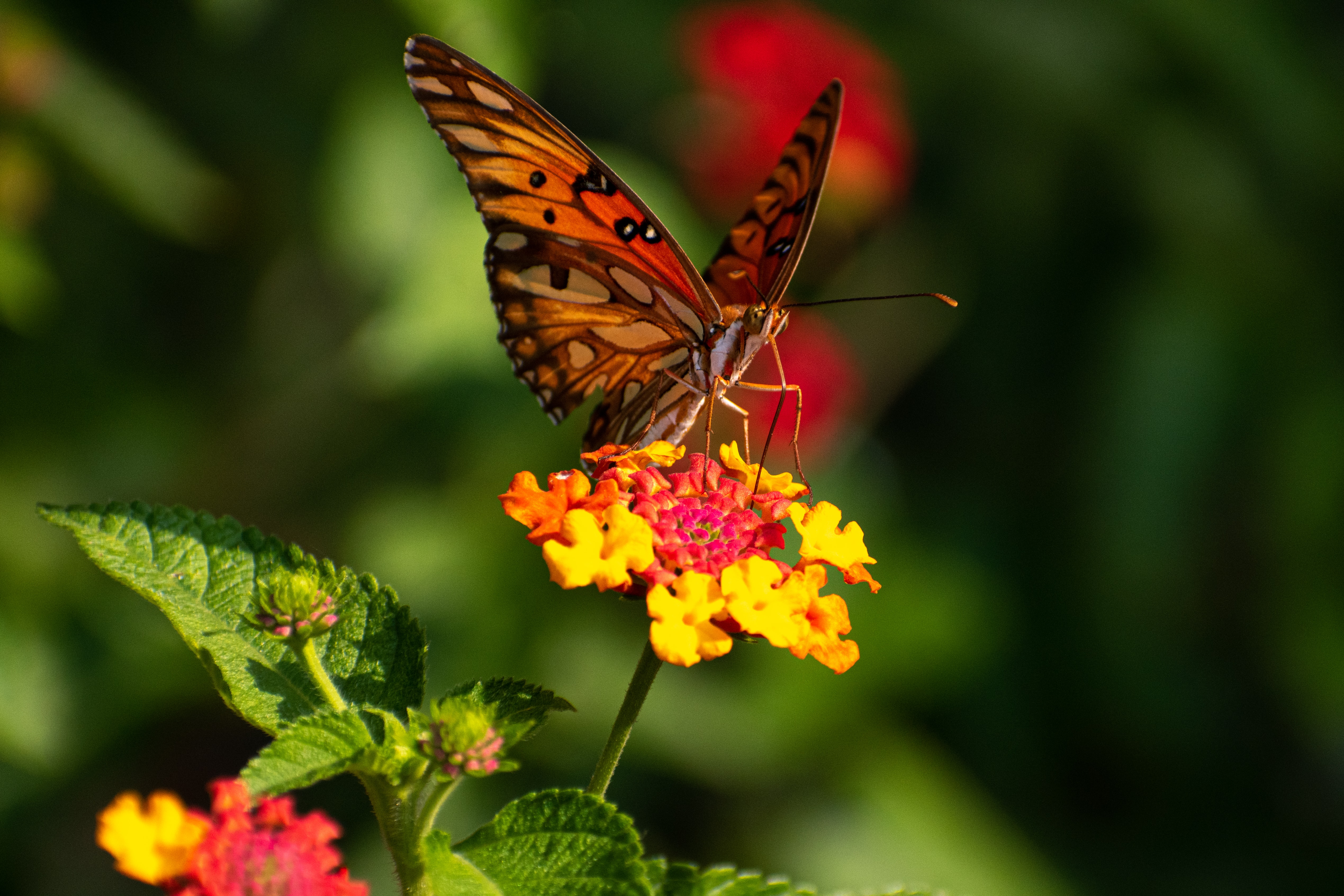 153415 download wallpaper Animals, Flowers, Pattern, Butterfly, Wings, Focus screensavers and pictures for free