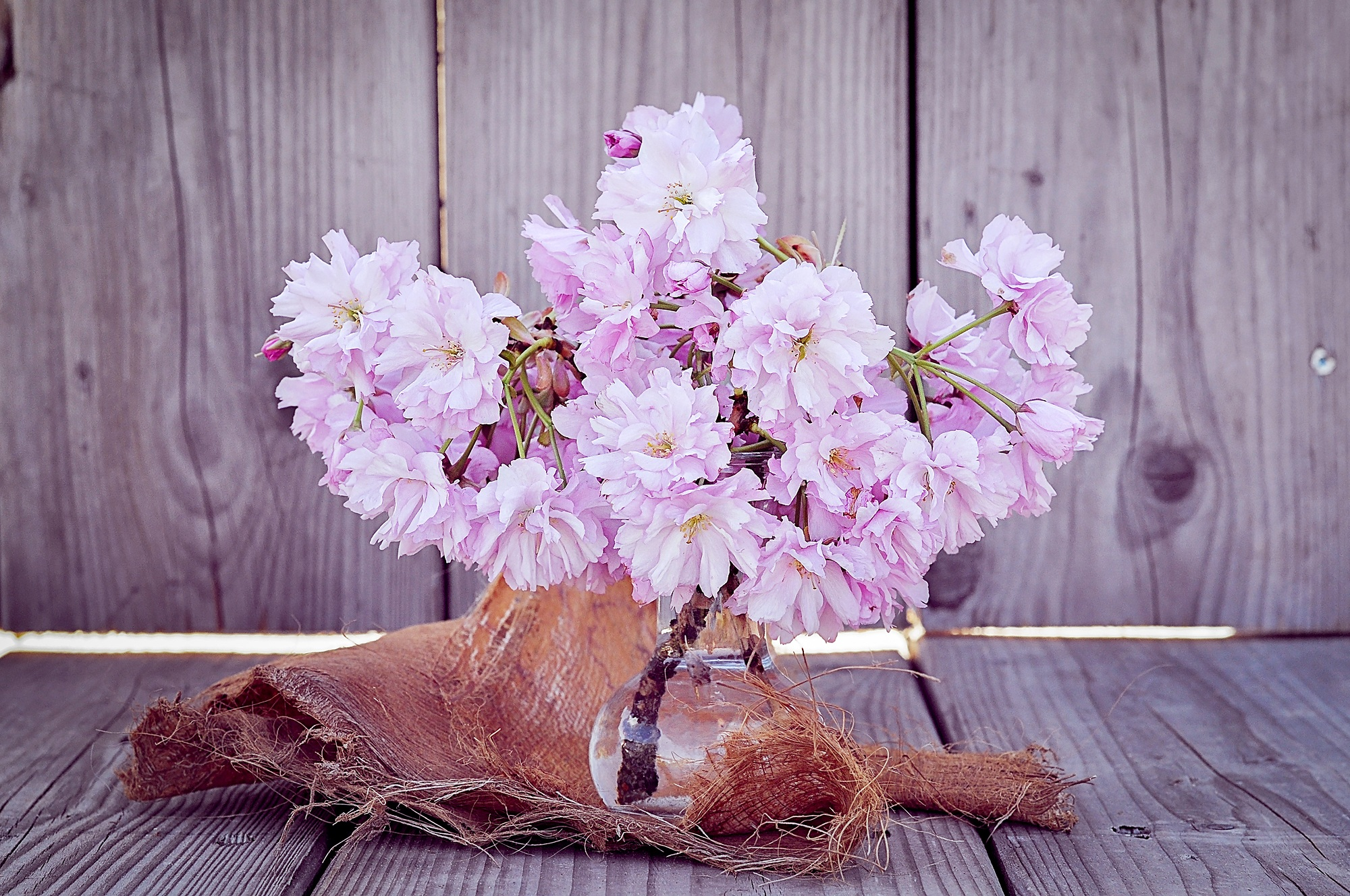 60558 Screensavers and Wallpapers Sakura for phone. Download Bouquet, Flowers, Sakura, Vase pictures for free