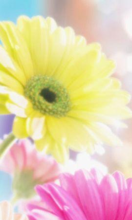 5664 скачать обои Растения, Цветы - заставки и картинки бесплатно