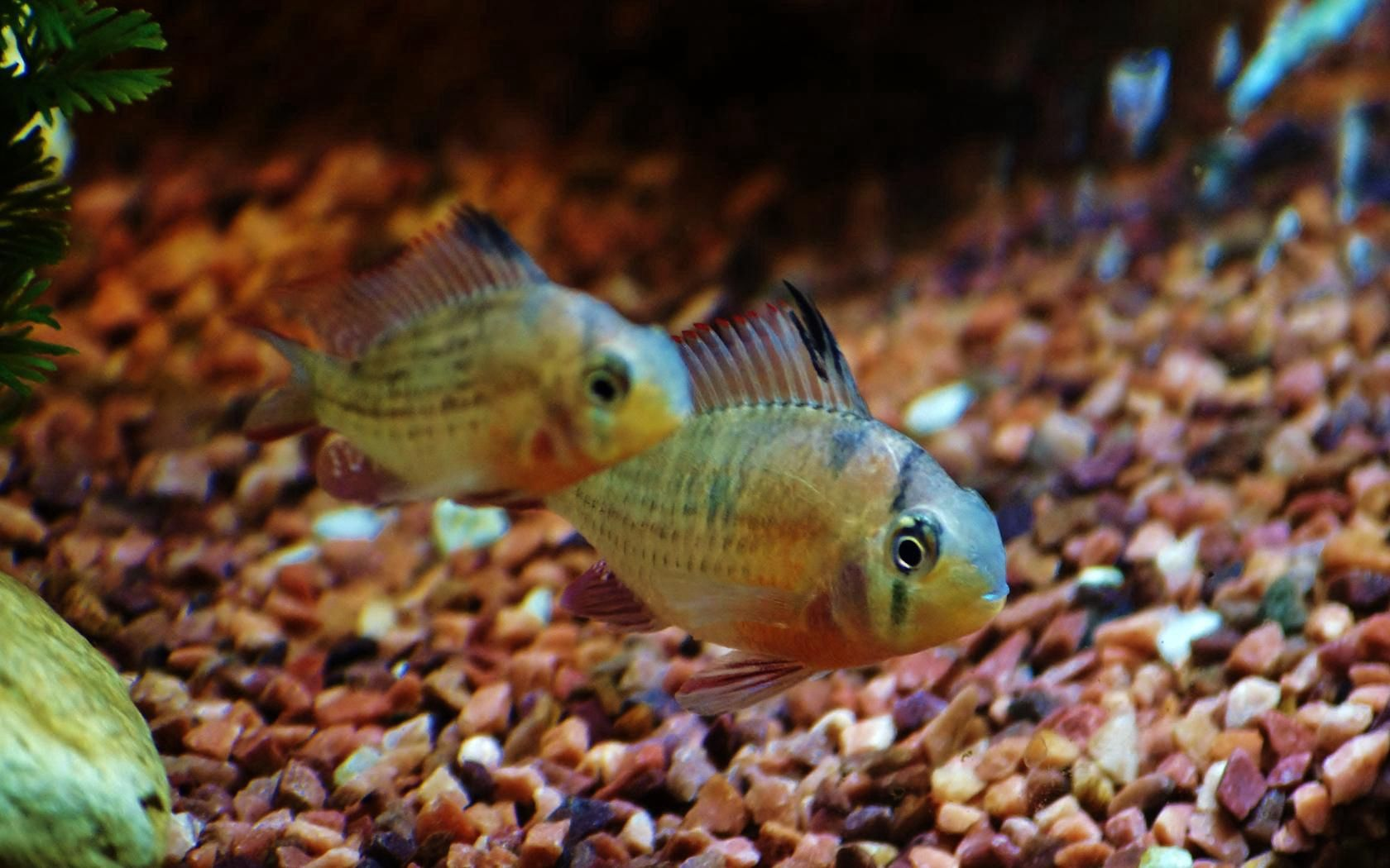 151707 download wallpaper Animals, Water, Fishes, Macro, Minimalism, Aquarium, Fish screensavers and pictures for free