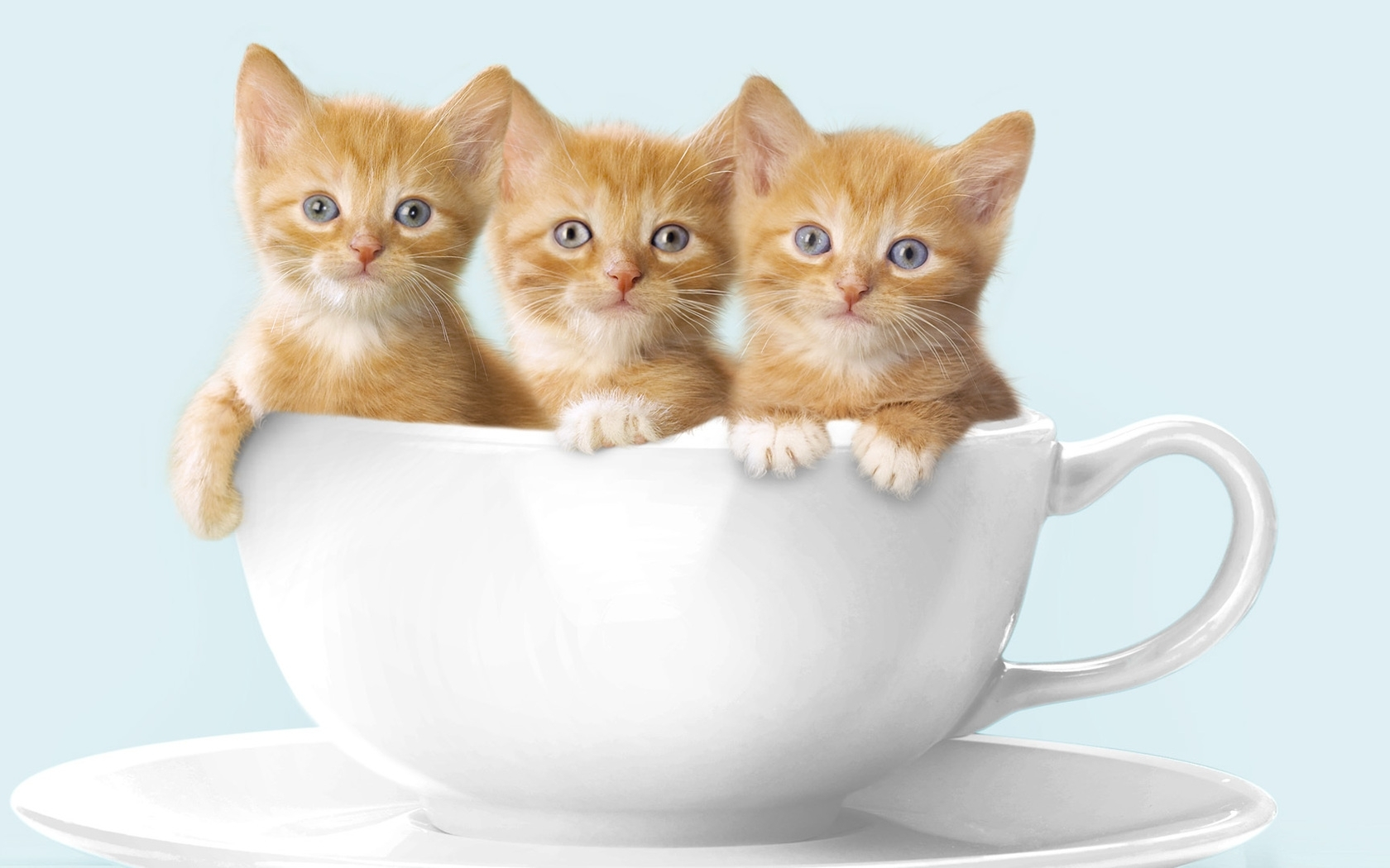 47892 download wallpaper Animals, Cats screensavers and pictures for free
