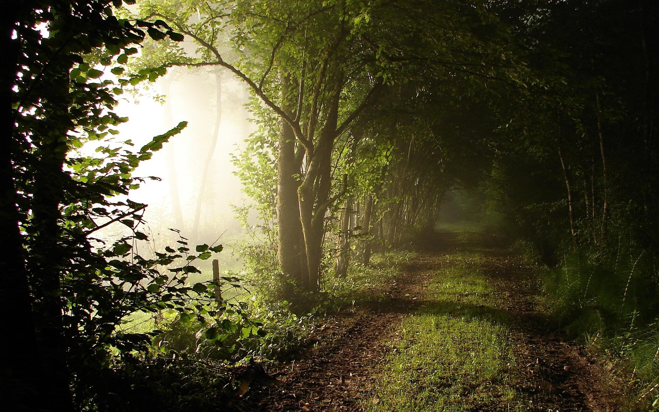 31453 скачать обои Пейзаж, Деревья, Дороги - заставки и картинки бесплатно
