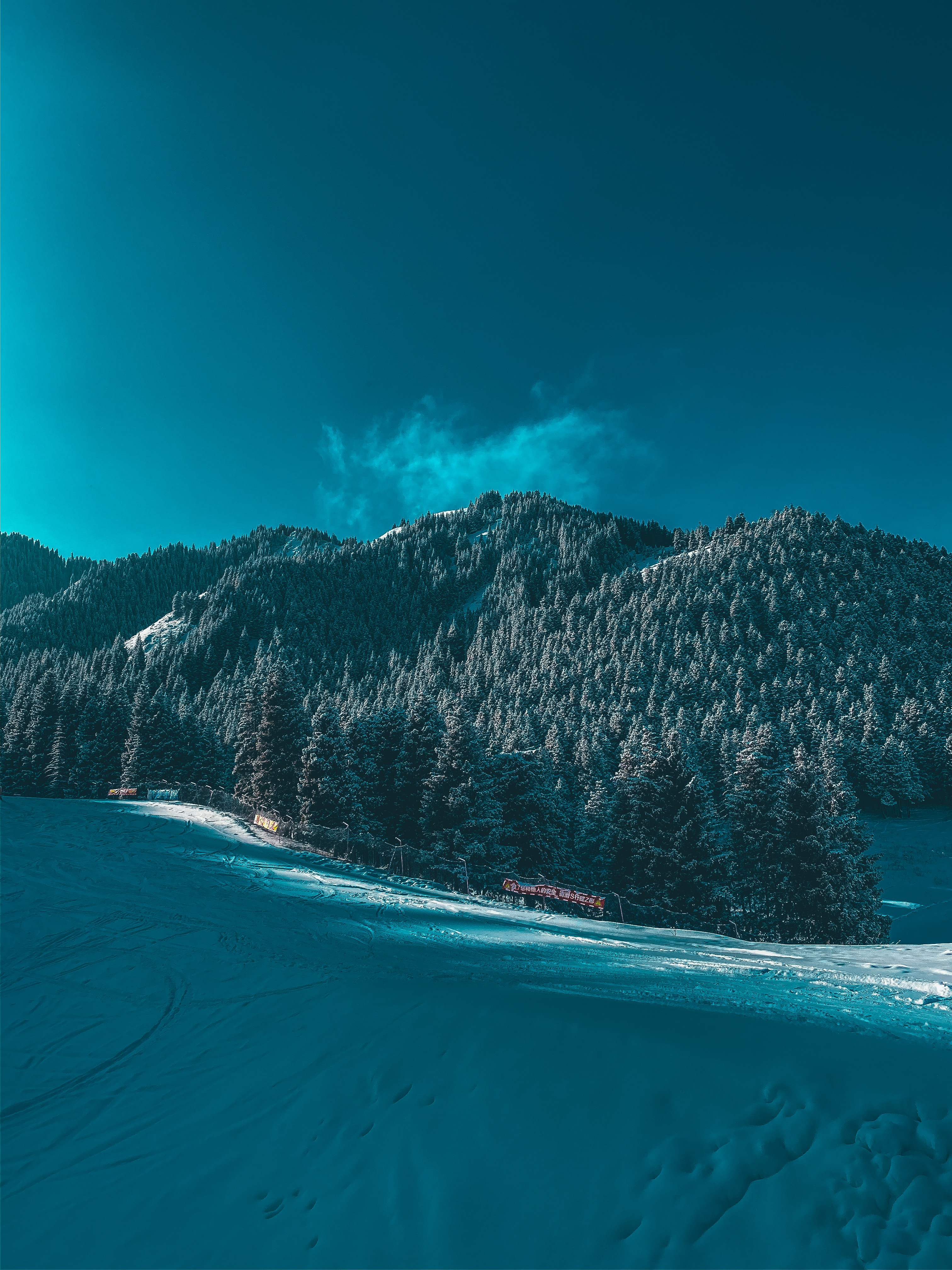 149928 download wallpaper Winter, Nature, Trees, Mountains, Snow, Ski Track screensavers and pictures for free