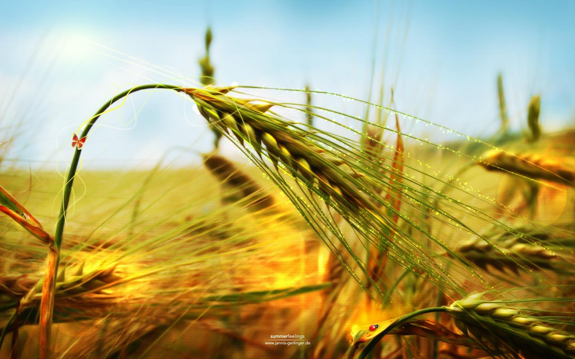 2198 скачать обои Растения, Трава, Арт, Пшеница - заставки и картинки бесплатно
