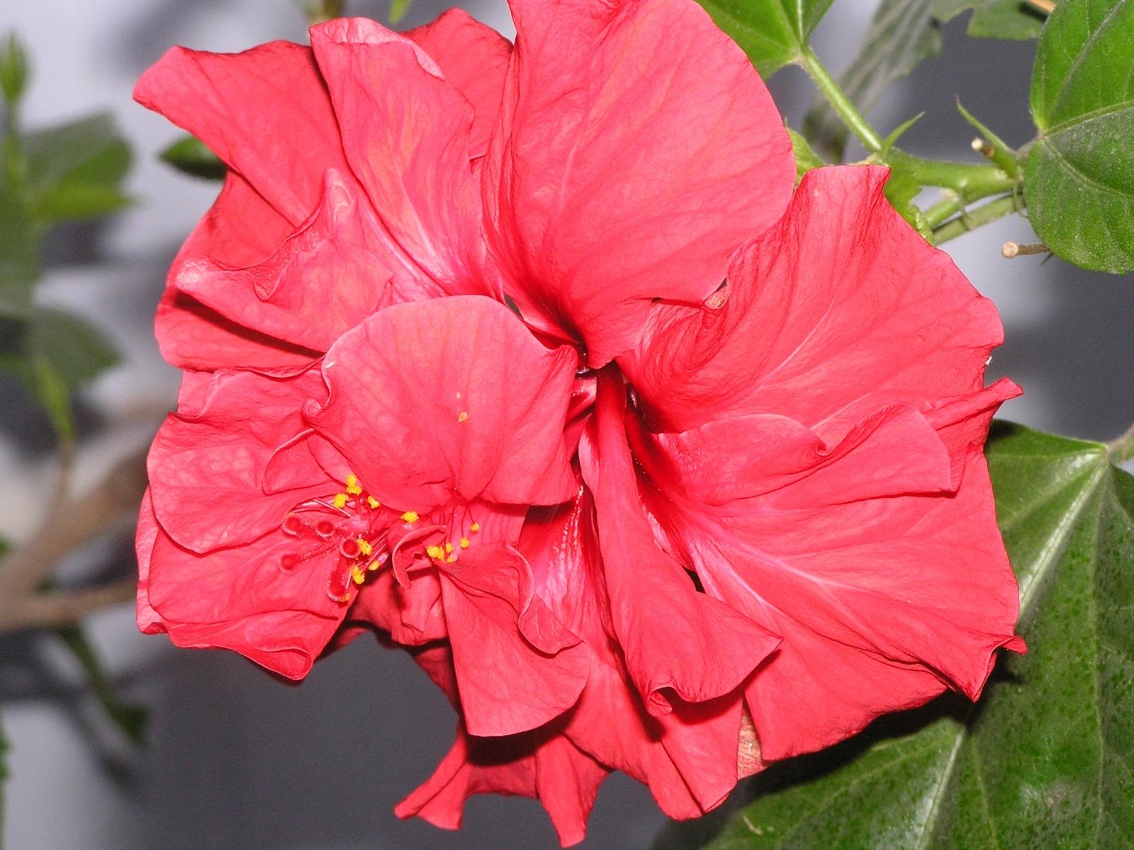 3185 скачать обои Растения, Цветы - заставки и картинки бесплатно