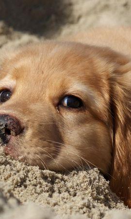 39924 baixar papel de parede Animais, Cães - protetores de tela e imagens gratuitamente