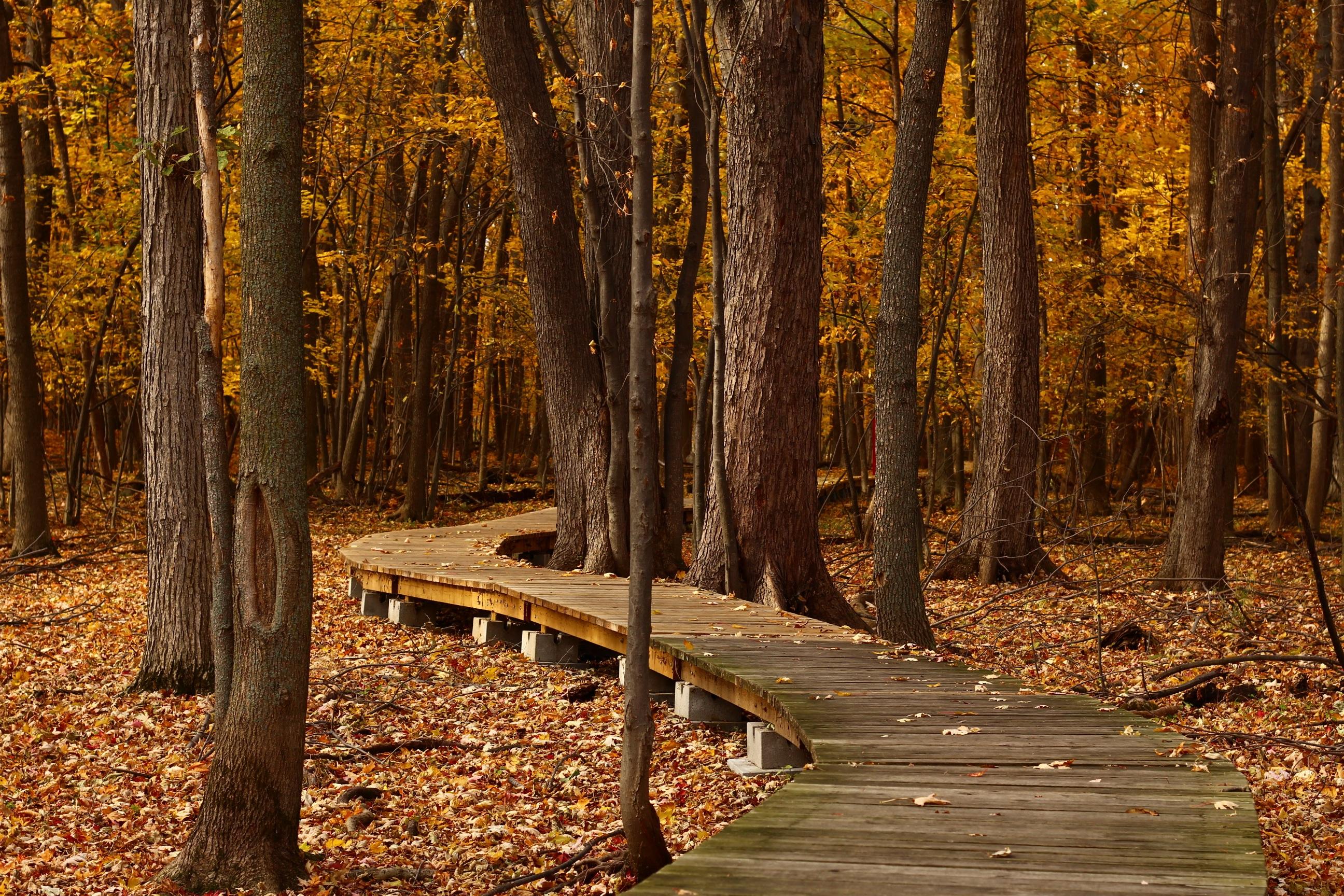 58764壁紙のダウンロード自然, 秋, 葉, 木の葉, 公園, 木-スクリーンセーバーと写真を無料で