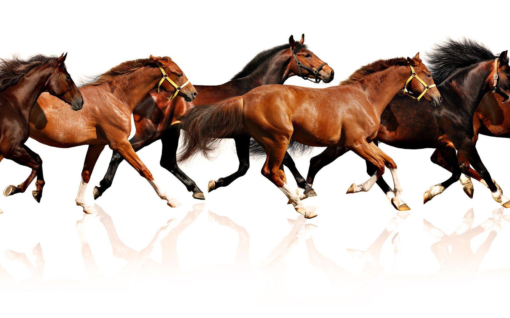 98081 Protetores de tela e papéis de parede Cavalos em seu telefone. Baixe Animais, Cavalos, Rebanho, Muitos, Manada, Fugir, Correr, Multidão fotos gratuitamente