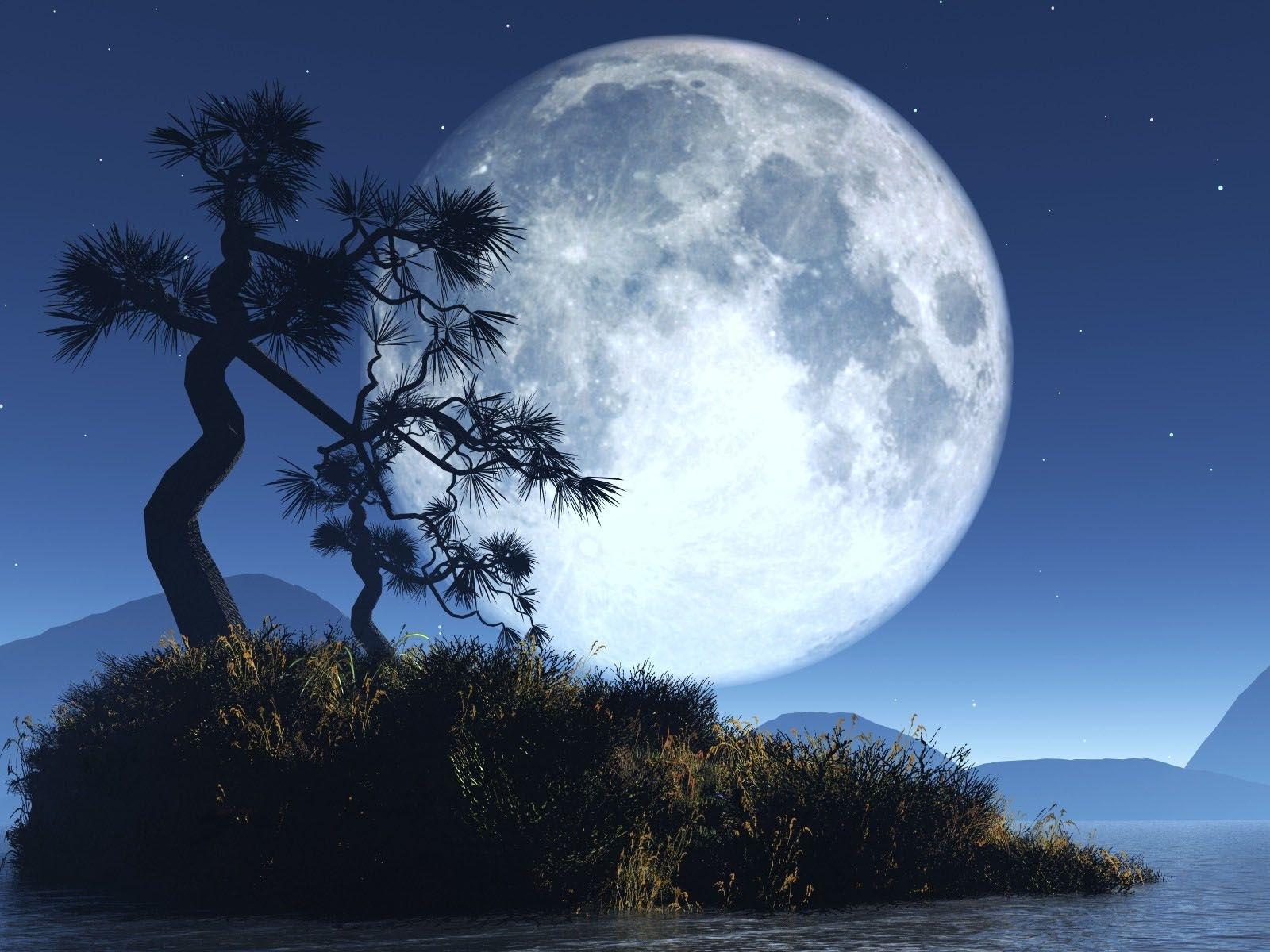 9858 免費下載壁紙 景观, 树, 夜, 月球 屏保和圖片