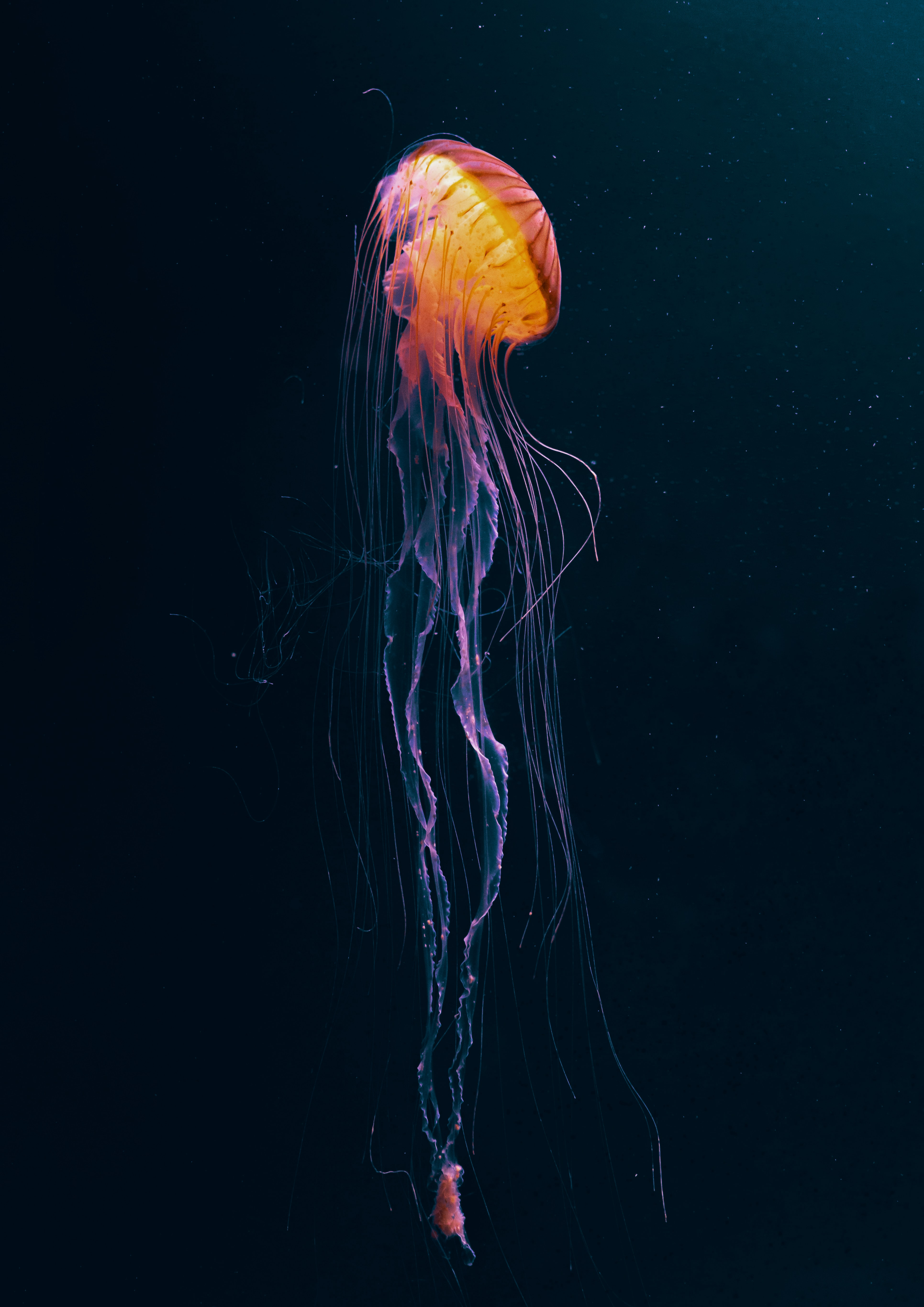 130538 download wallpaper Animals, Jellyfish, Tentacles, Underwater World, Animal, Dark screensavers and pictures for free