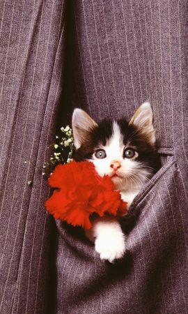 6861 download wallpaper Holidays, Animals, Cats screensavers and pictures for free