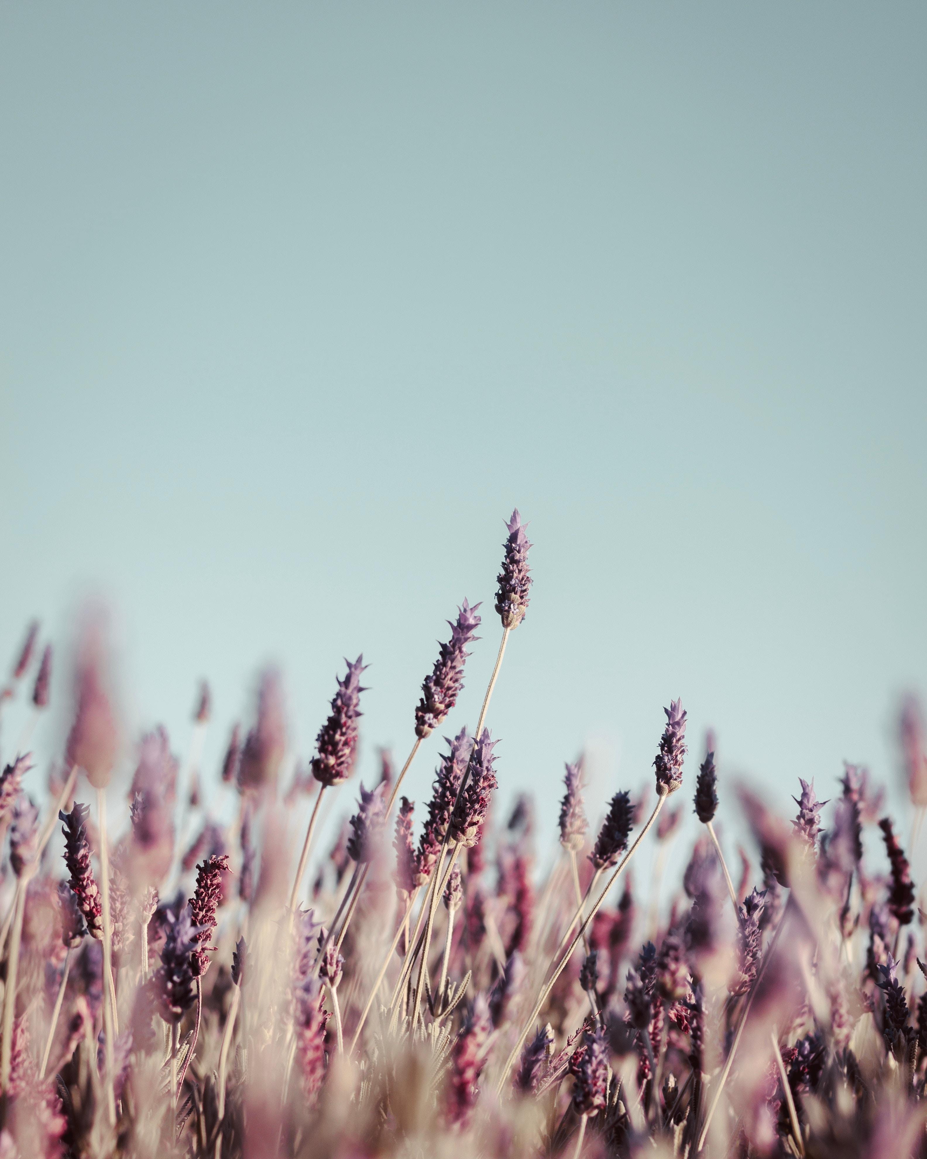 135854 Заставки и Обои Трава на телефон. Скачать Макро, Трава, Соцветия, Цветение, Стебли, Растение картинки бесплатно