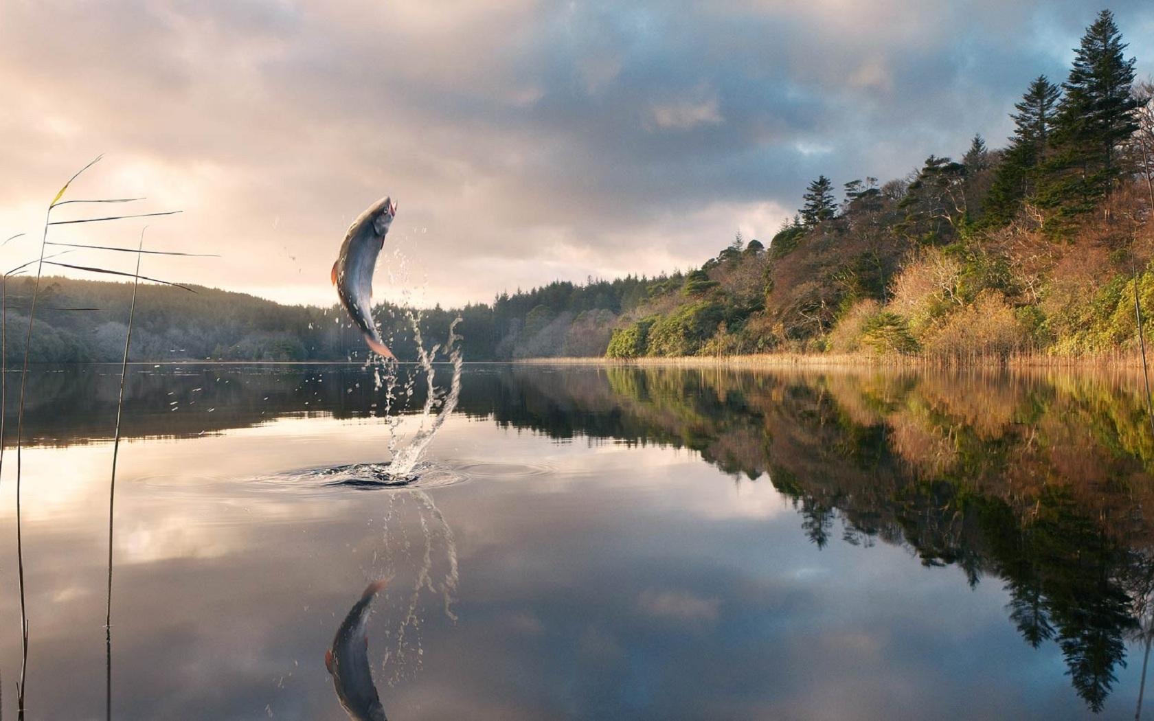 49014 Заставки и Обои Рыбы на телефон. Скачать Пейзаж, Природа, Рыбы картинки бесплатно