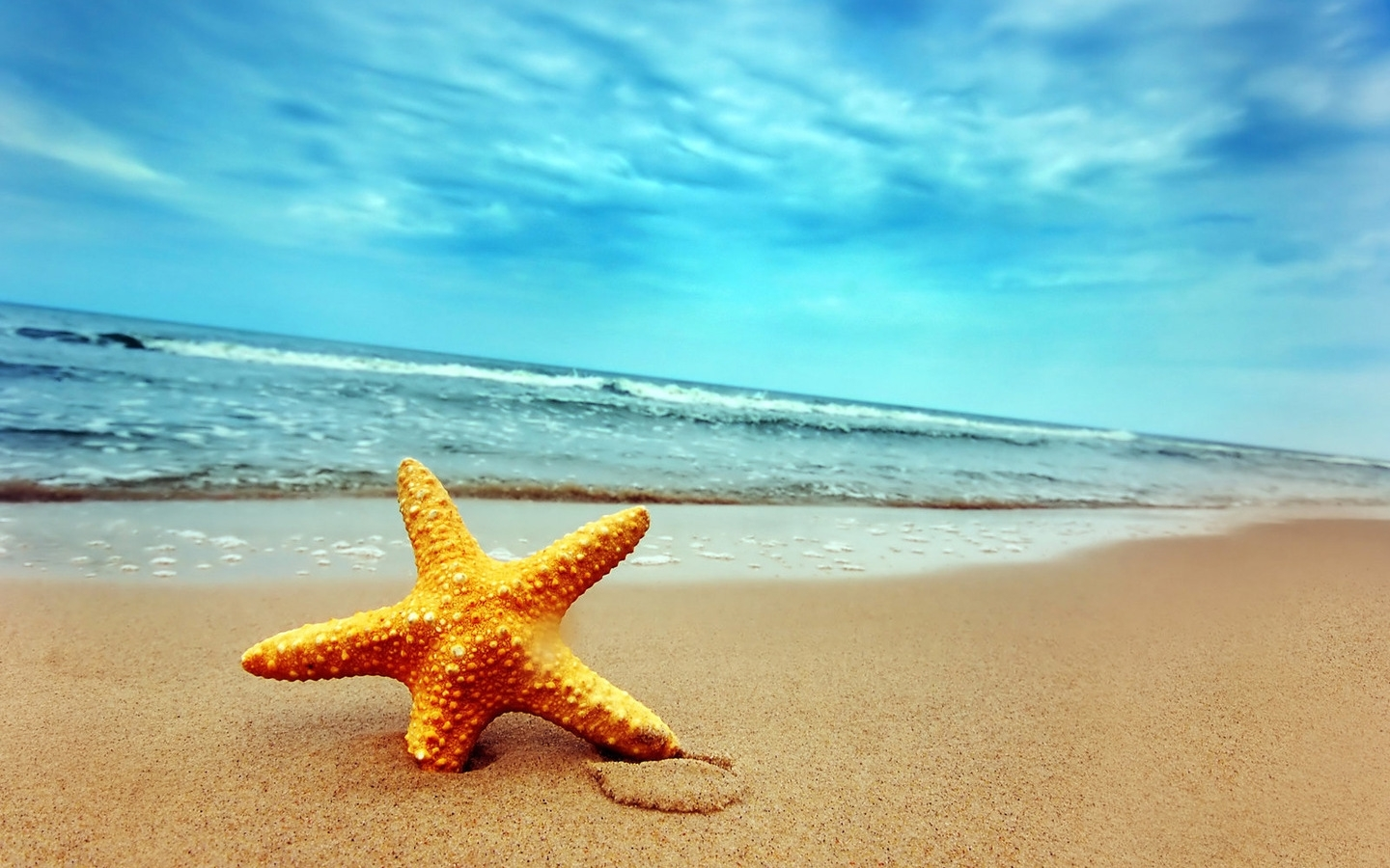 29315 download wallpaper Background, Sea, Beach, Starfish screensavers and pictures for free