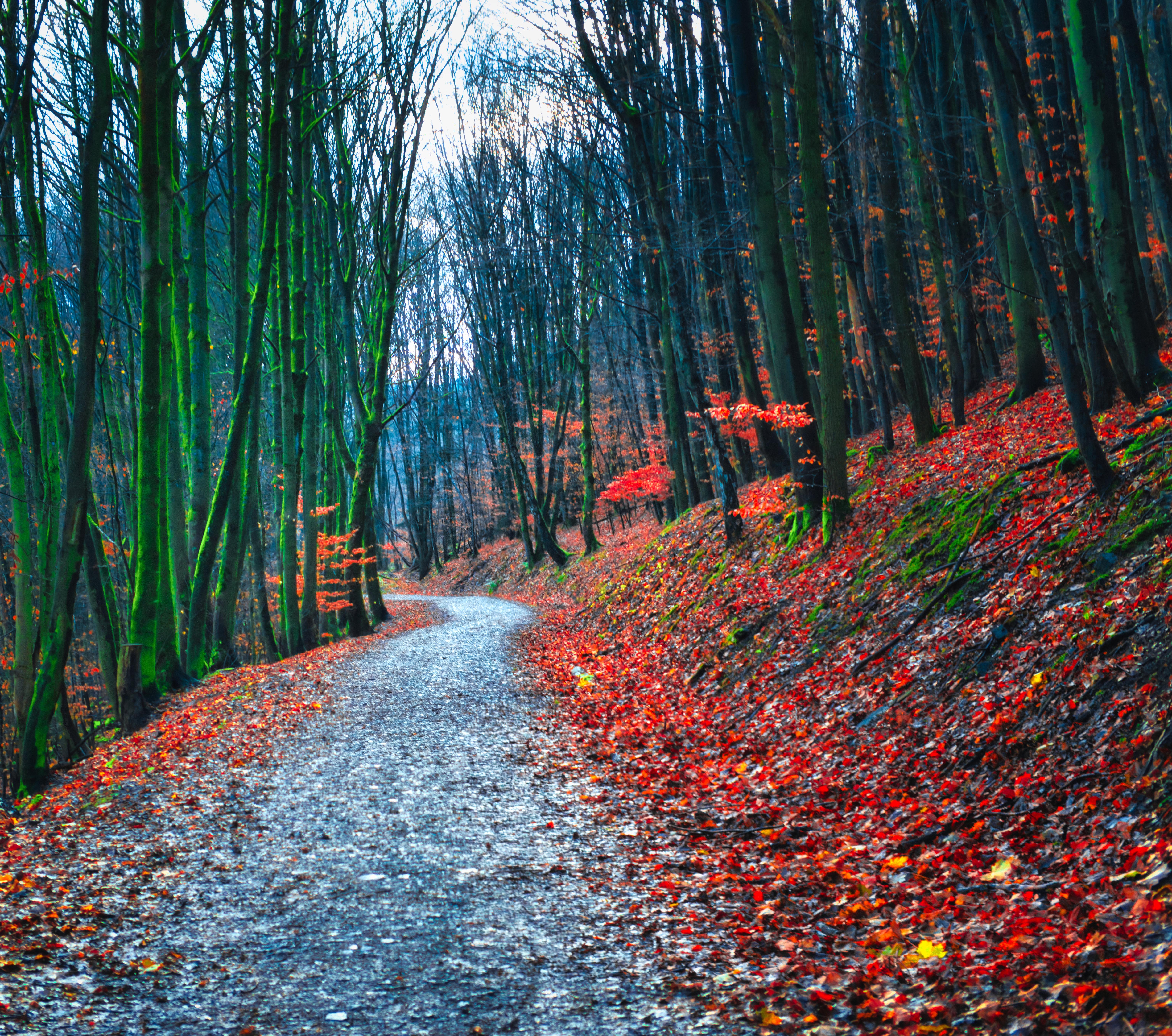139902 скачать обои Лес, Тропинка, Осень, Природа, Опавшая Листва - заставки и картинки бесплатно