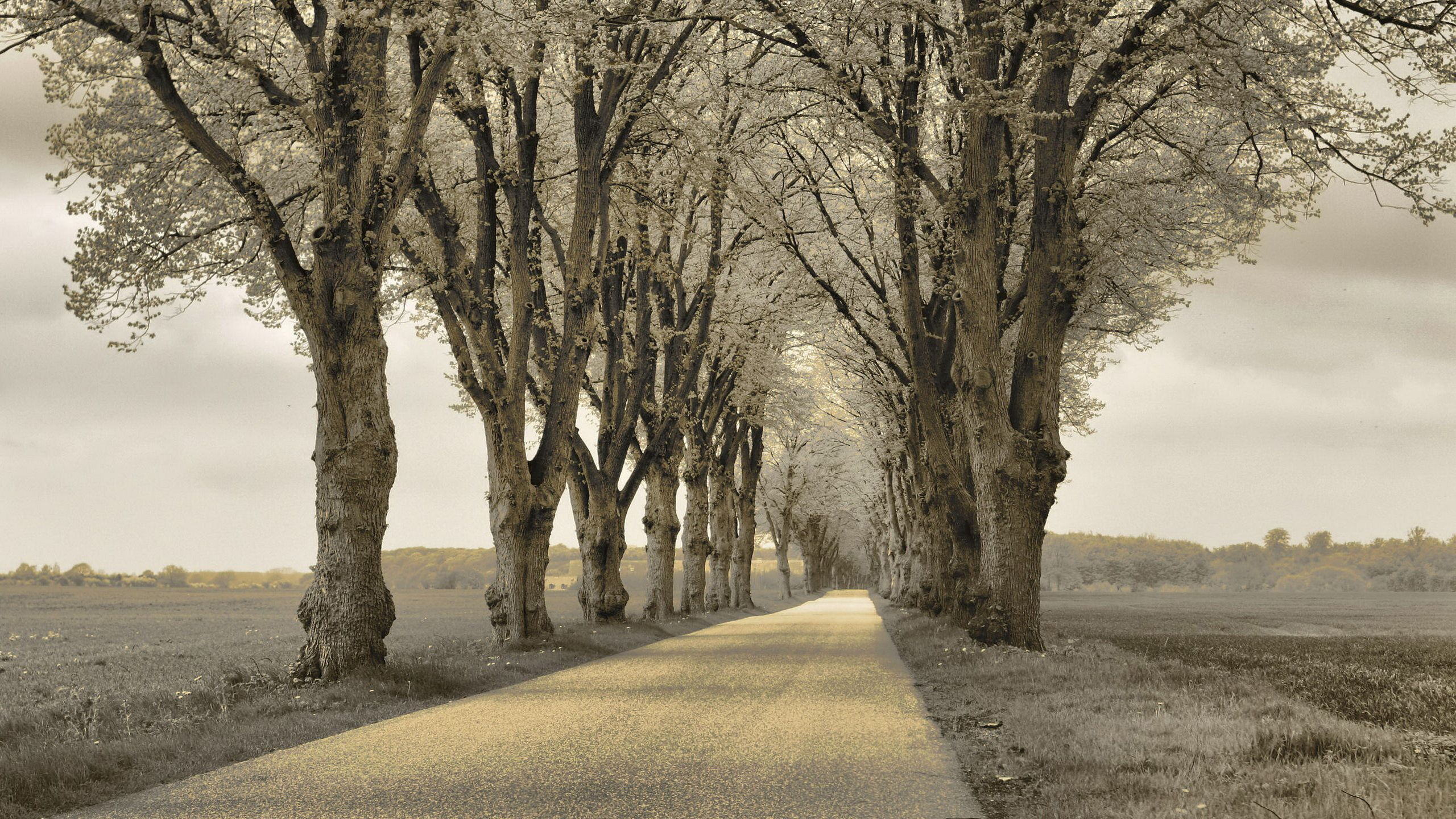 140620 free download Gray wallpapers for phone, Nature, Trees, Asphalt, Track Gray images and screensavers for mobile