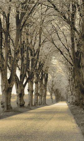 140620 скачать Серые обои на телефон бесплатно, Природа, Деревья, Асфальт, Дорожка Серые картинки и заставки на мобильный