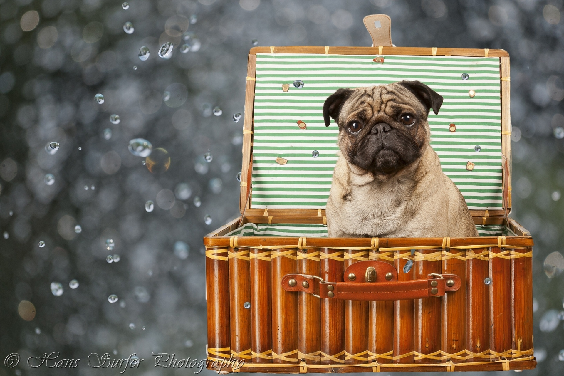 88587 Screensavers and Wallpapers Sit for phone. Download Animals, Sit, Dog, Basket pictures for free
