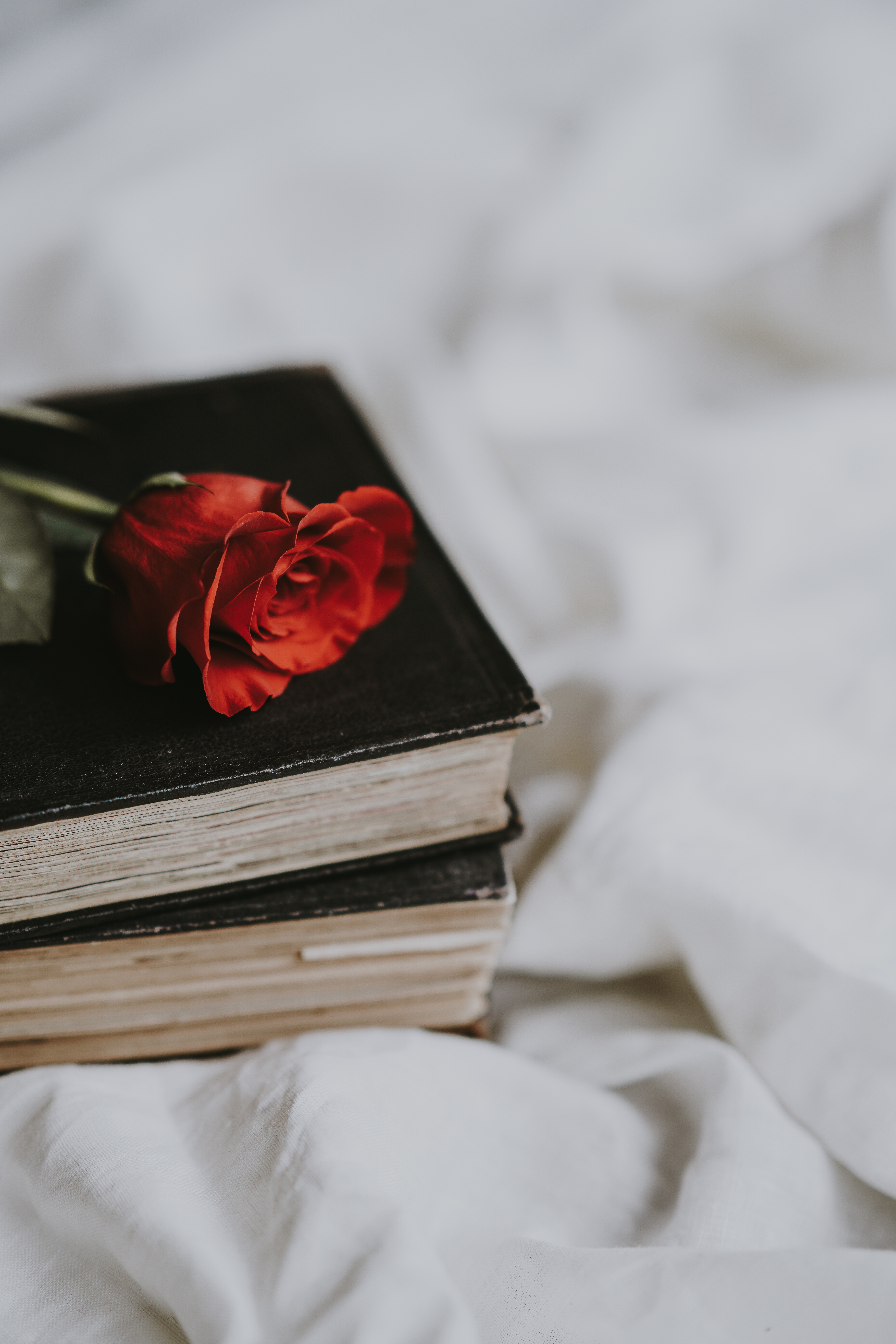 116350 Hintergrundbild herunterladen Blume, Blumen, Bücher, Rose, Unschärfe, Glatt - Bildschirmschoner und Bilder kostenlos