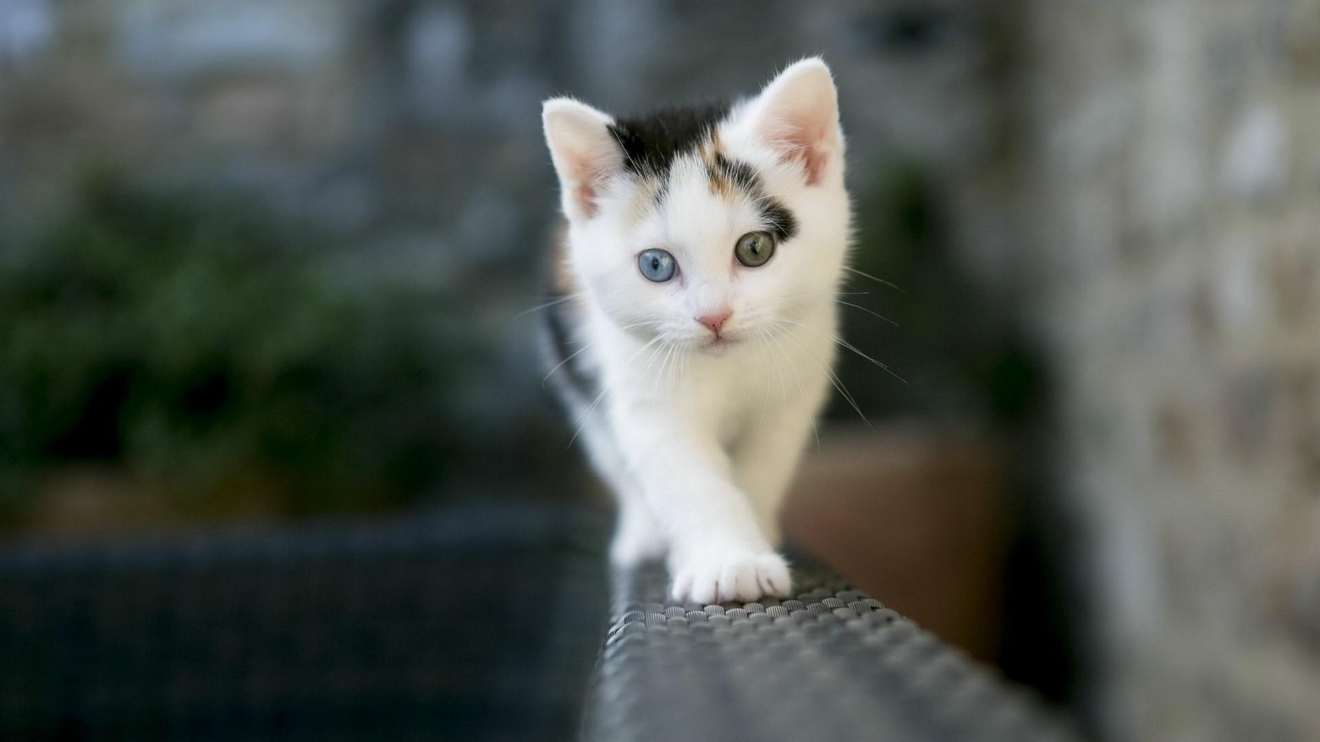 28872 скачать обои Кошки (Коты, Котики), Животные - заставки и картинки бесплатно