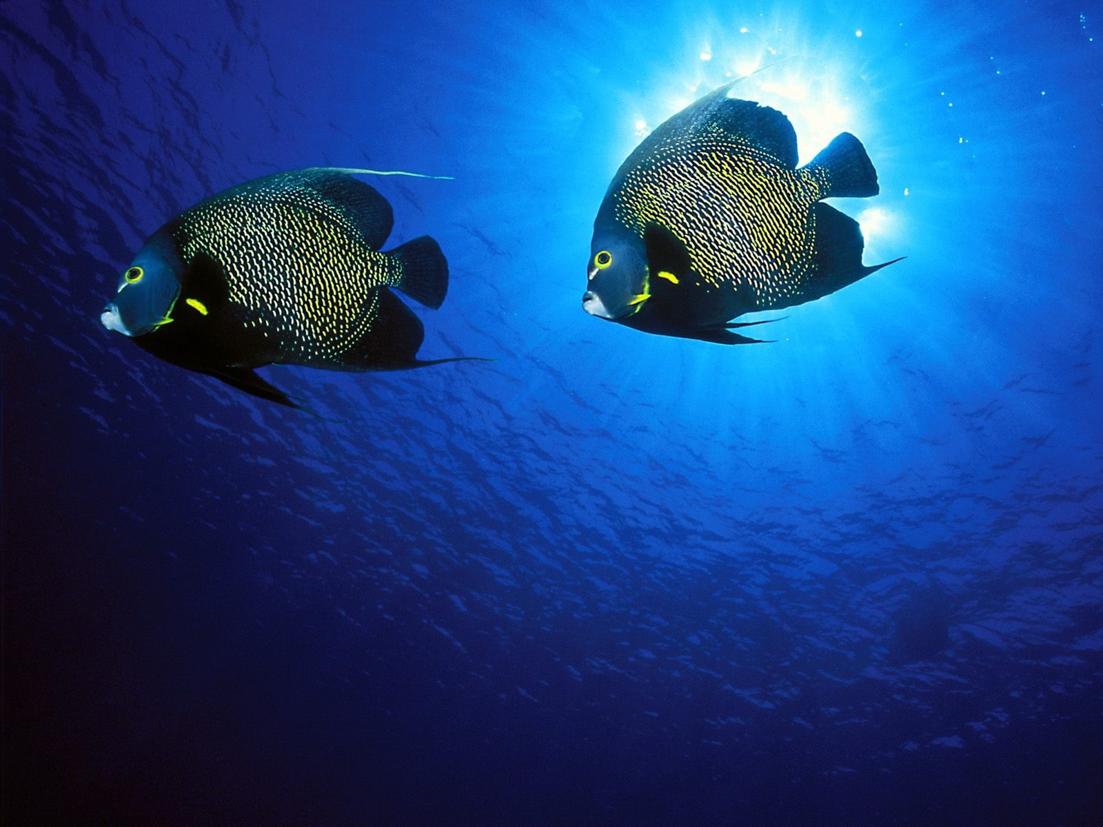 5365 download wallpaper Animals, Sea, Fishes screensavers and pictures for free