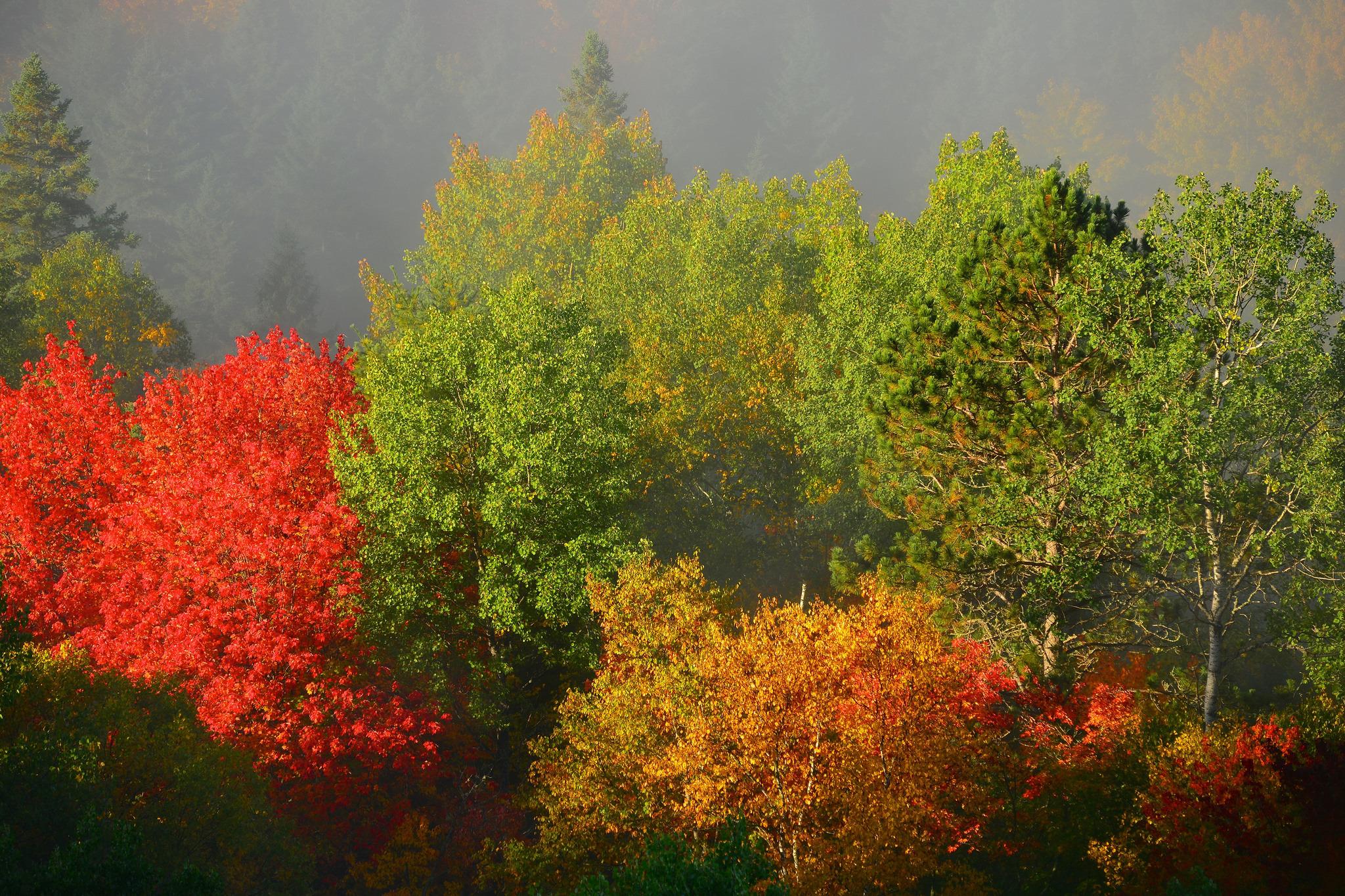 156317 fond d'écran 1080x2400 sur votre téléphone gratuitement, téléchargez des images Nature, Arbres, Automne, Brouillard, Feuillage 1080x2400 sur votre mobile