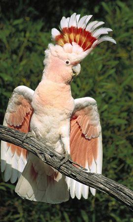 78 baixar papel de parede Animais, Aves, Papagaios - protetores de tela e imagens gratuitamente