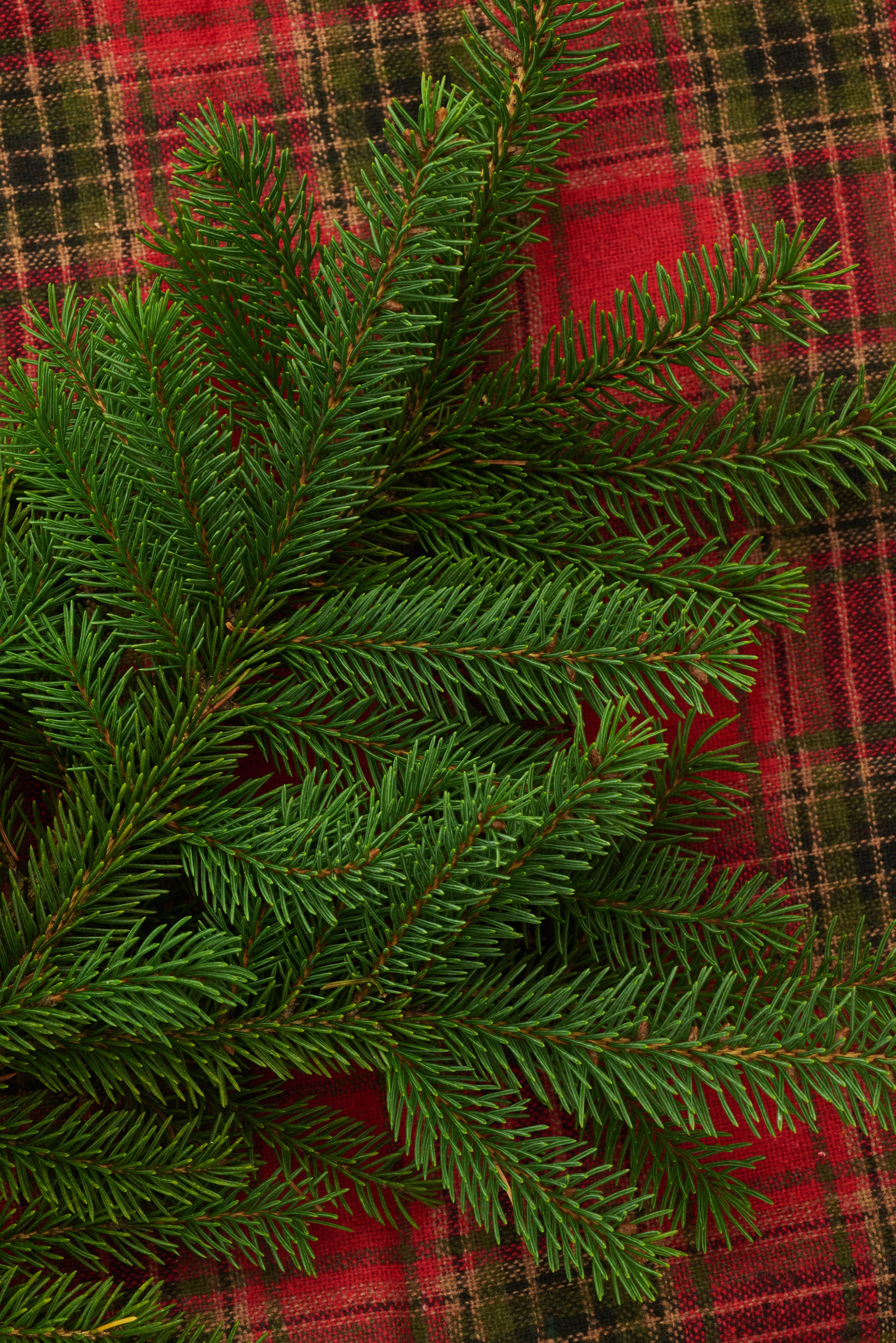 85251 Hintergrundbild herunterladen Feiertage, Nadeln, Kiefer, Neujahr, Weihnachten, Neues Jahr, Ast, Zweig, Pine, Plaid - Bildschirmschoner und Bilder kostenlos