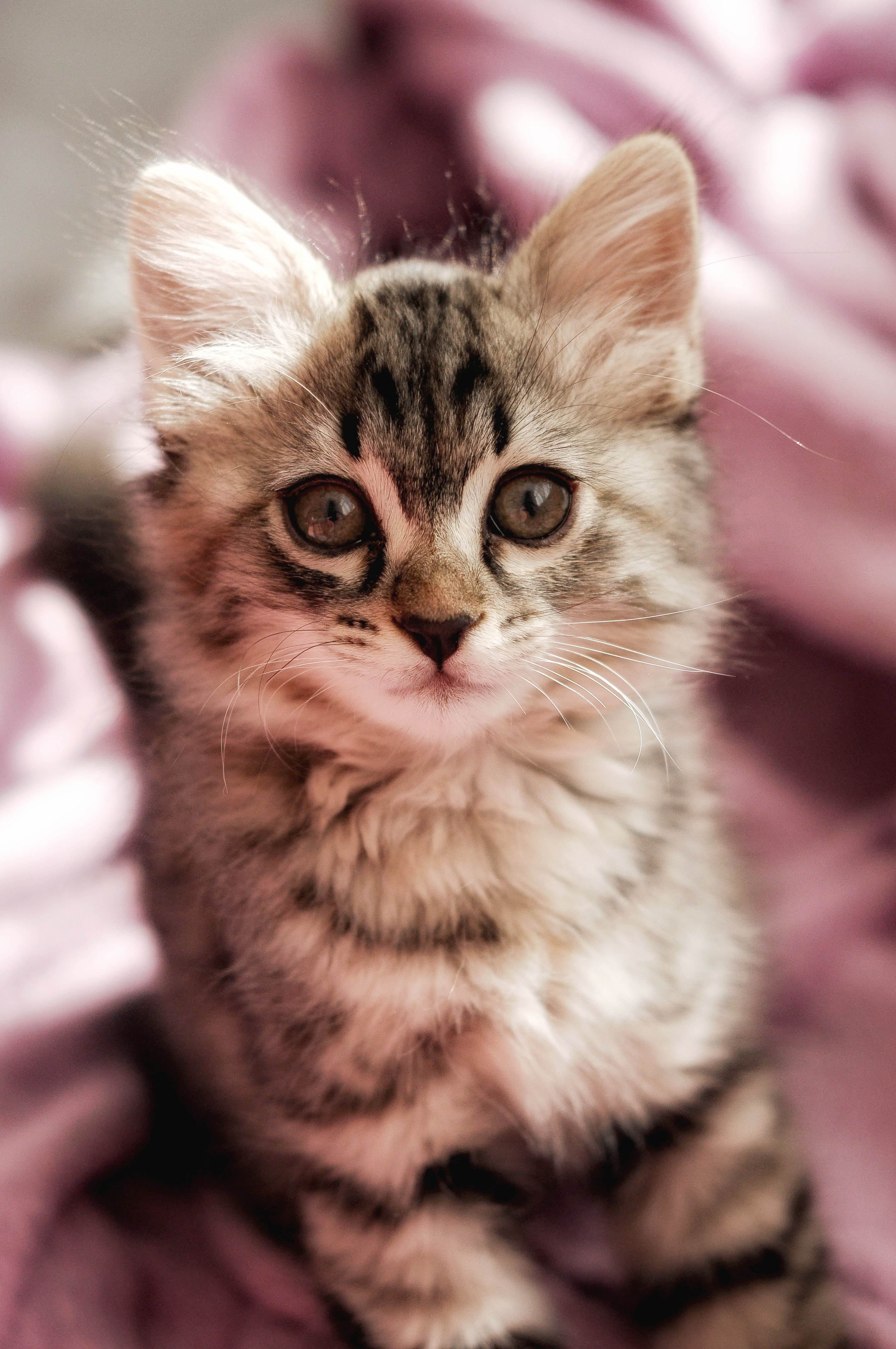 66958 download wallpaper Animals, Cat, Kitty, Kitten, Pet, Sight, Opinion, Nice, Sweetheart, Fluffy screensavers and pictures for free