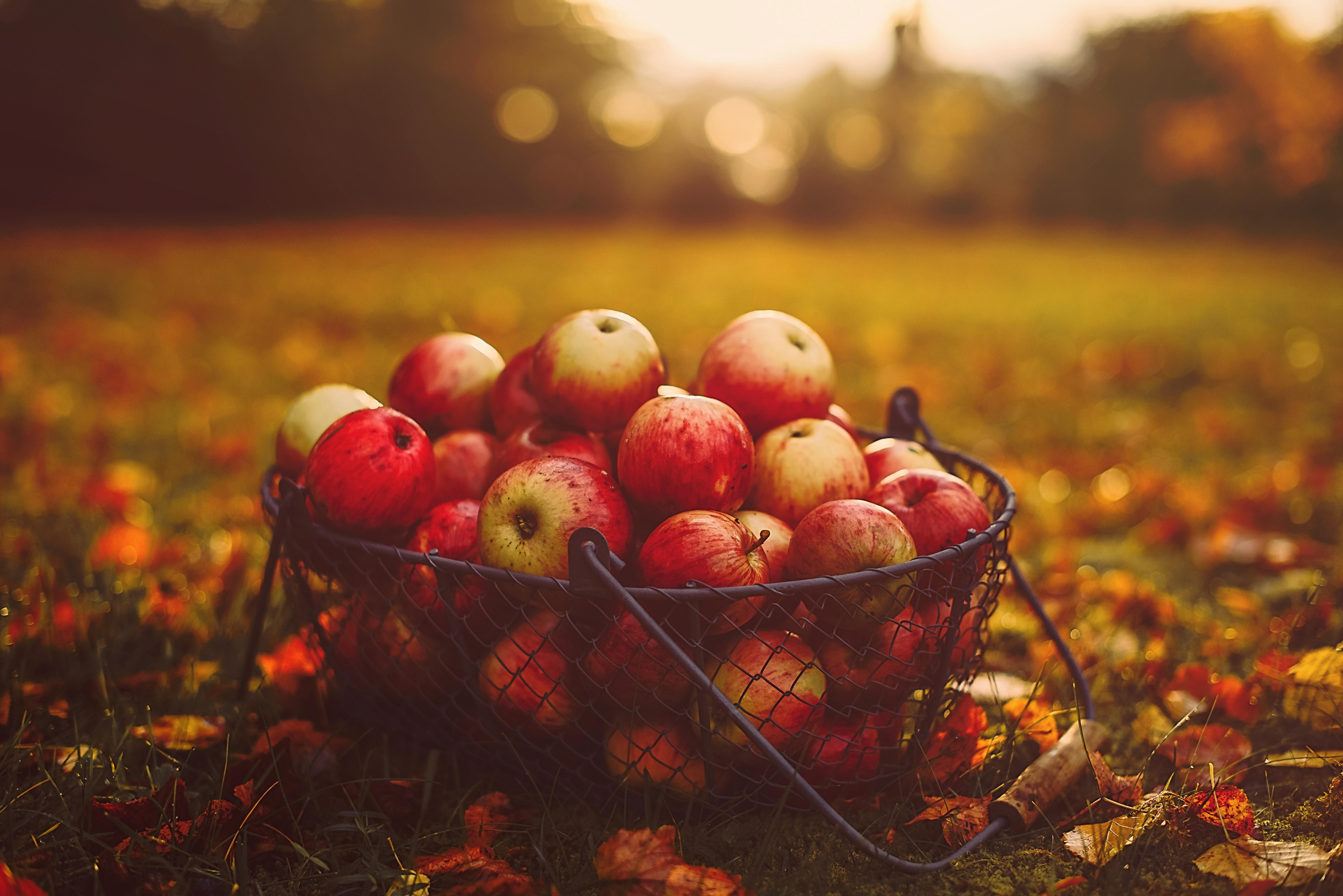 123844 скачать обои Еда, Корзина, Осень, Урожай, Яблоки - заставки и картинки бесплатно