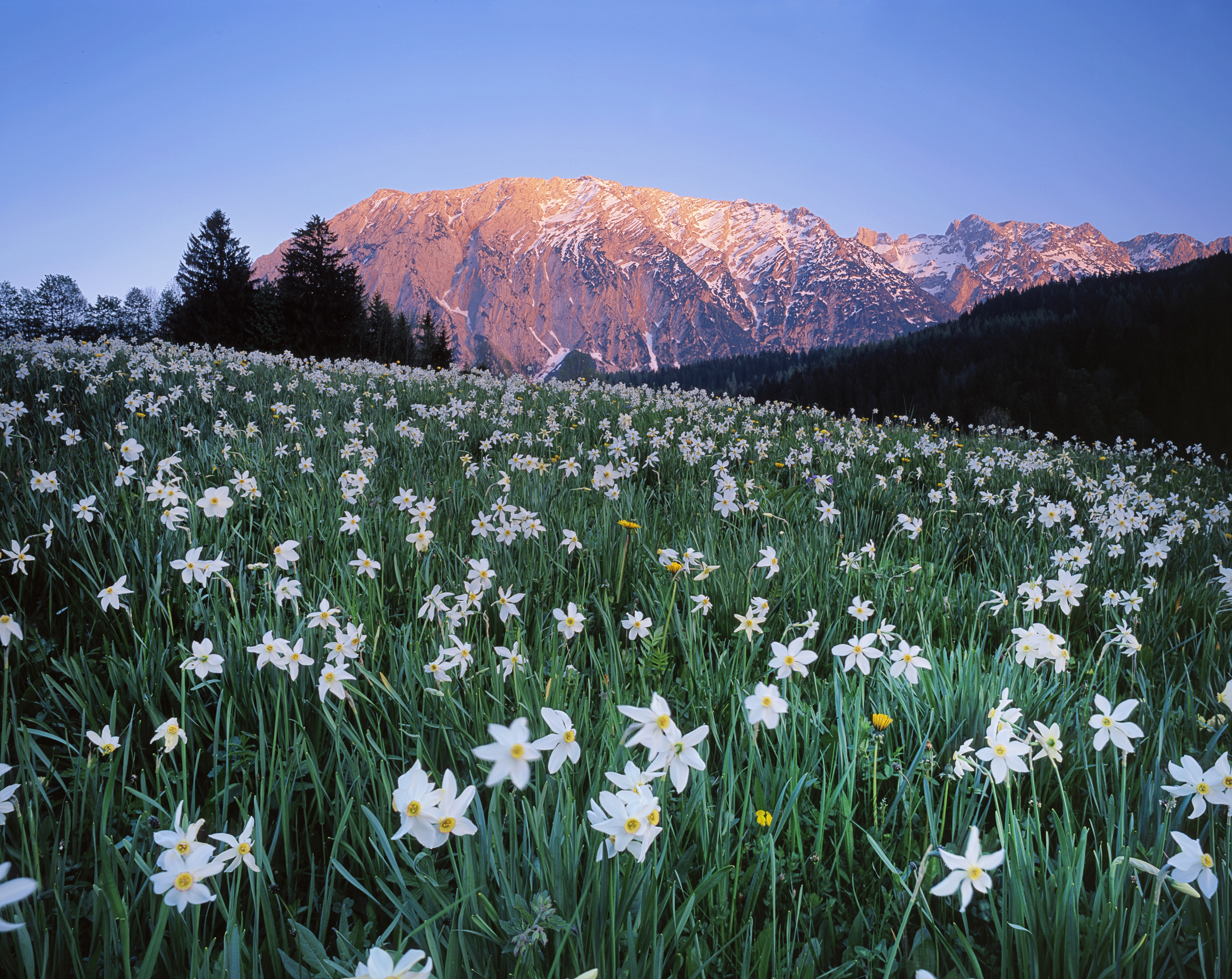 145827 download wallpaper Nature, Austria, Meadow, Field, Sky, Mountains, Flowers screensavers and pictures for free