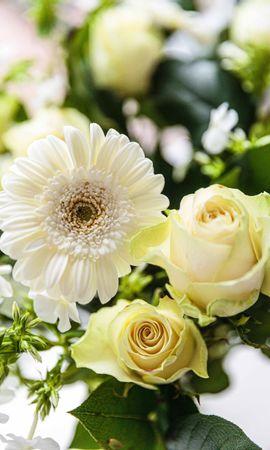 51747 скачать обои Цветы, Букет, Цветение, Растения - заставки и картинки бесплатно