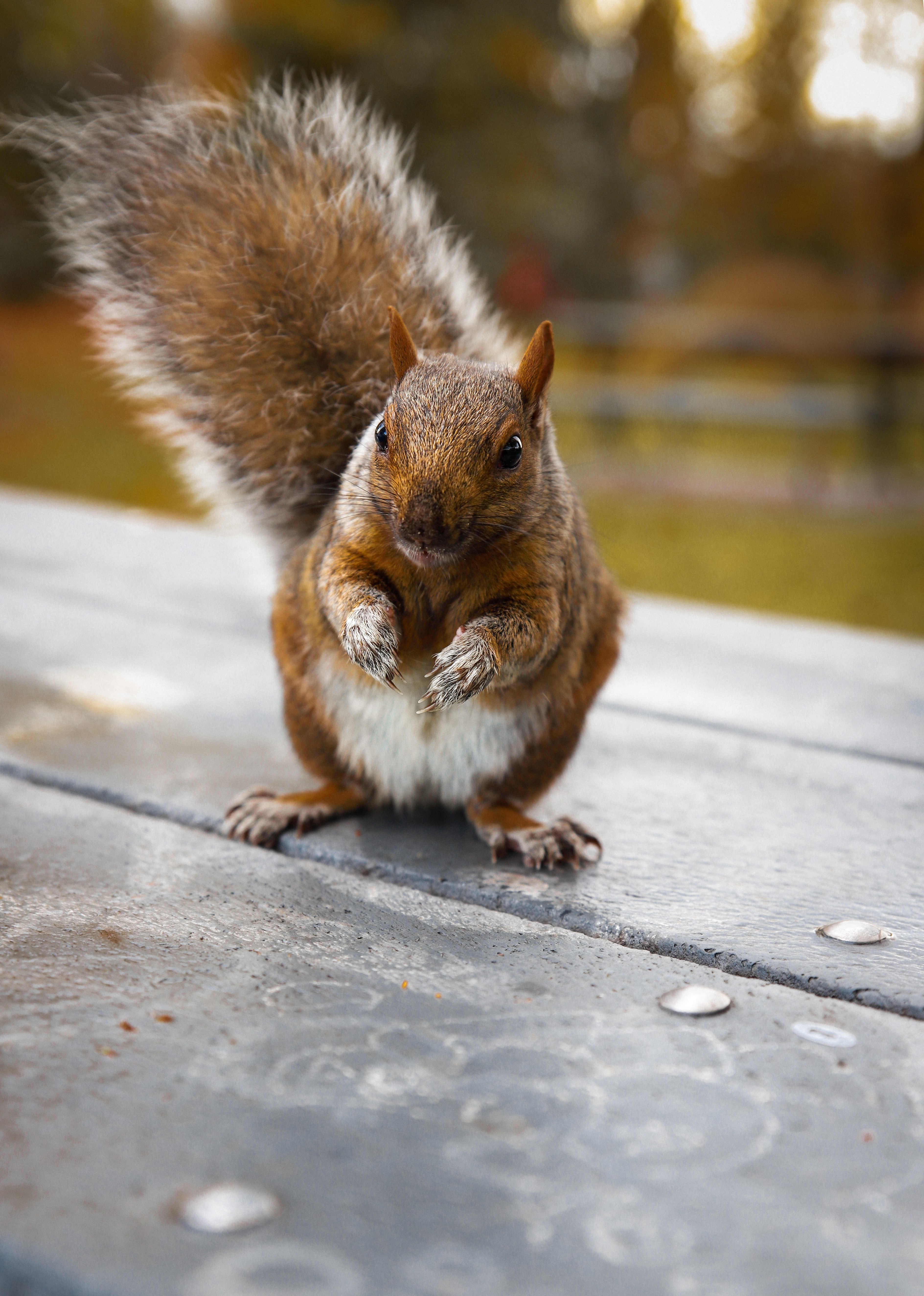 123939 download wallpaper Animals, Squirrel, Nice, Sweetheart, Funny, Rodent screensavers and pictures for free