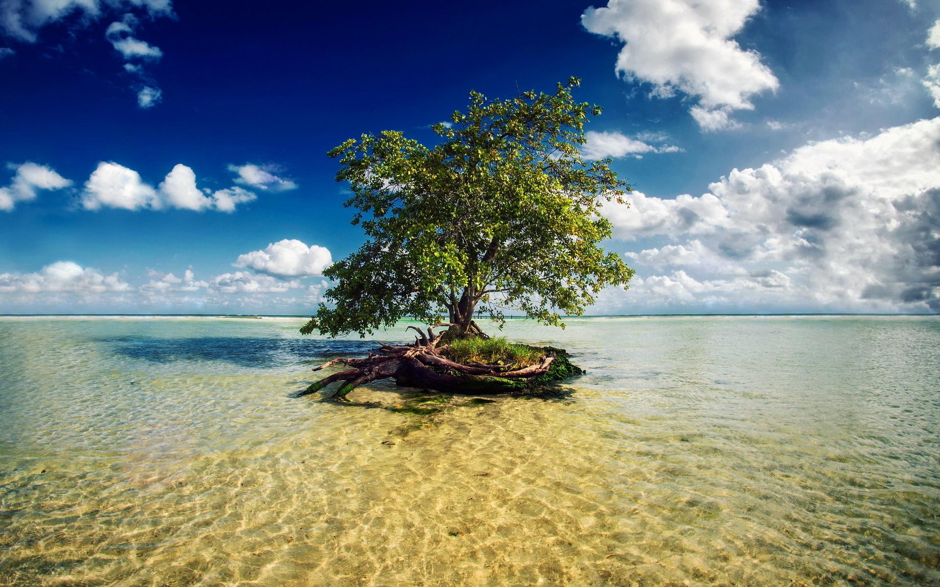 40160 скачать обои Пейзаж, Деревья, Море - заставки и картинки бесплатно