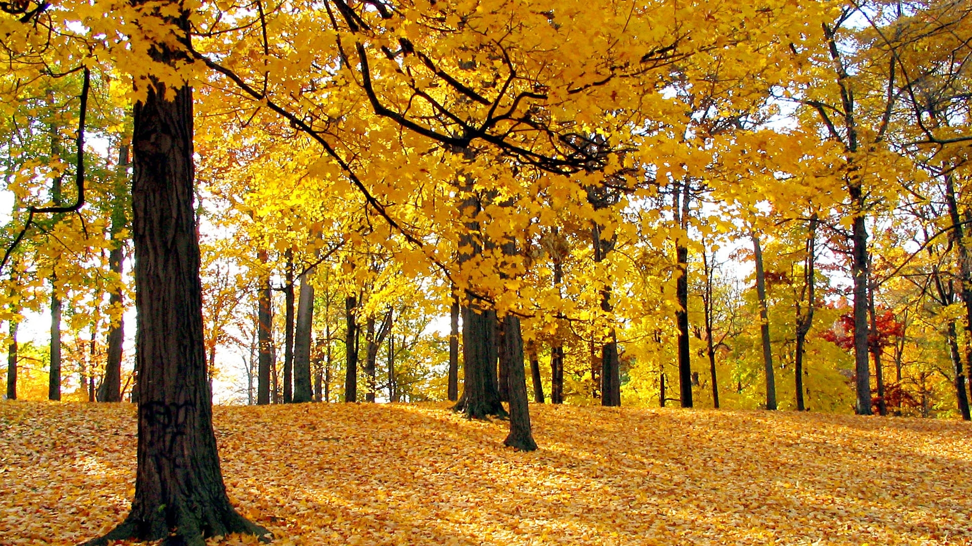 18313 download wallpaper Landscape, Trees, Autumn screensavers and pictures for free