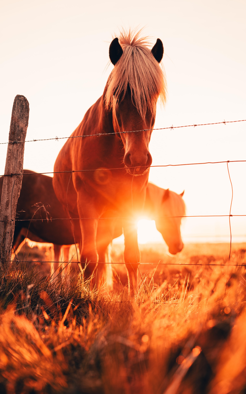 73830 Hintergrundbild 1080x1920 kostenlos auf deinem Handy, lade Bilder Pferde, Tiere, Grass, Blendung, Zaun 1080x1920 auf dein Handy herunter