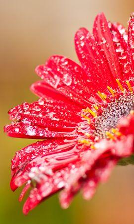 25529 скачать обои Растения, Цветы, Капли - заставки и картинки бесплатно