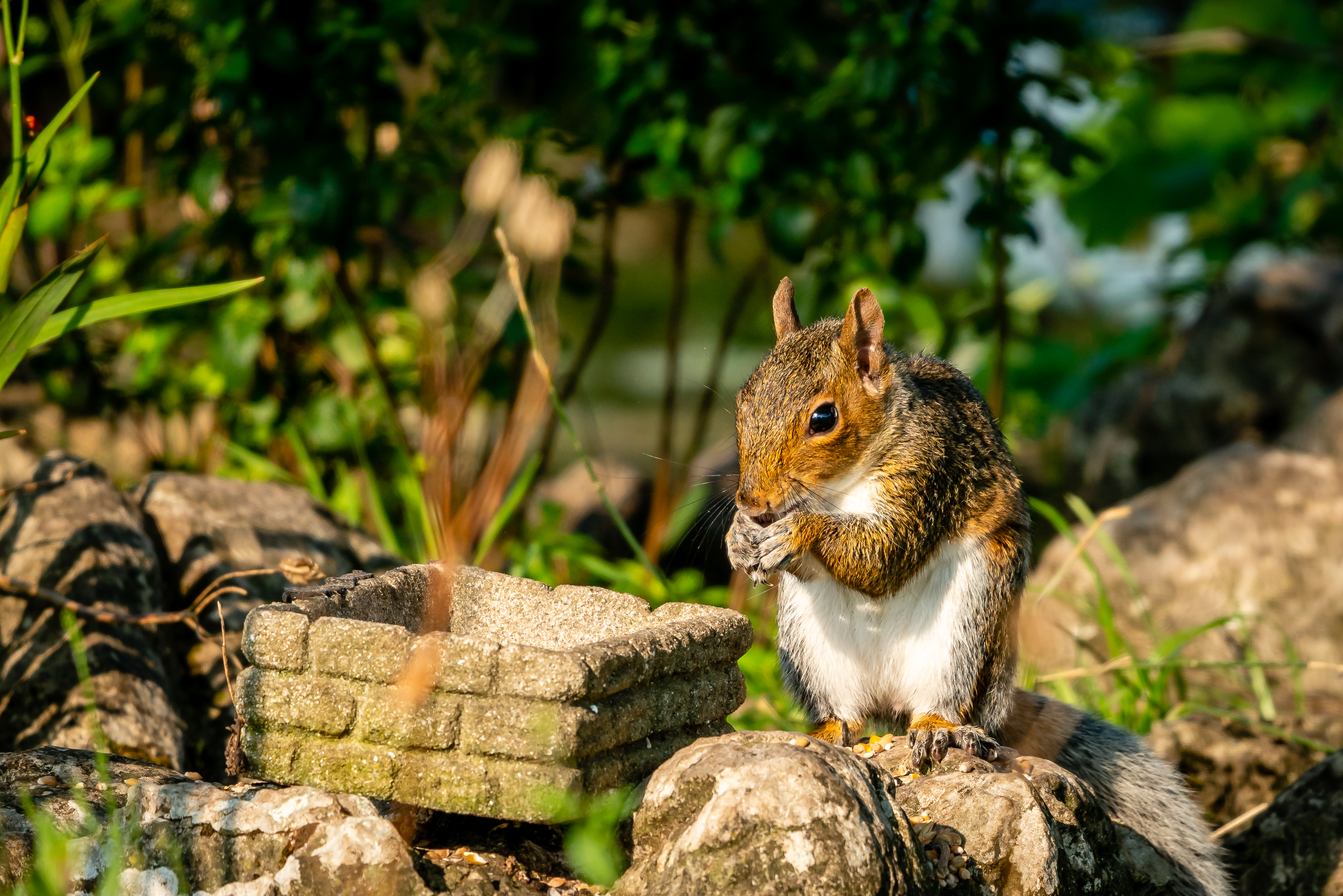 72215 download wallpaper Animals, Squirrel, Rodent, Animal, Stones screensavers and pictures for free