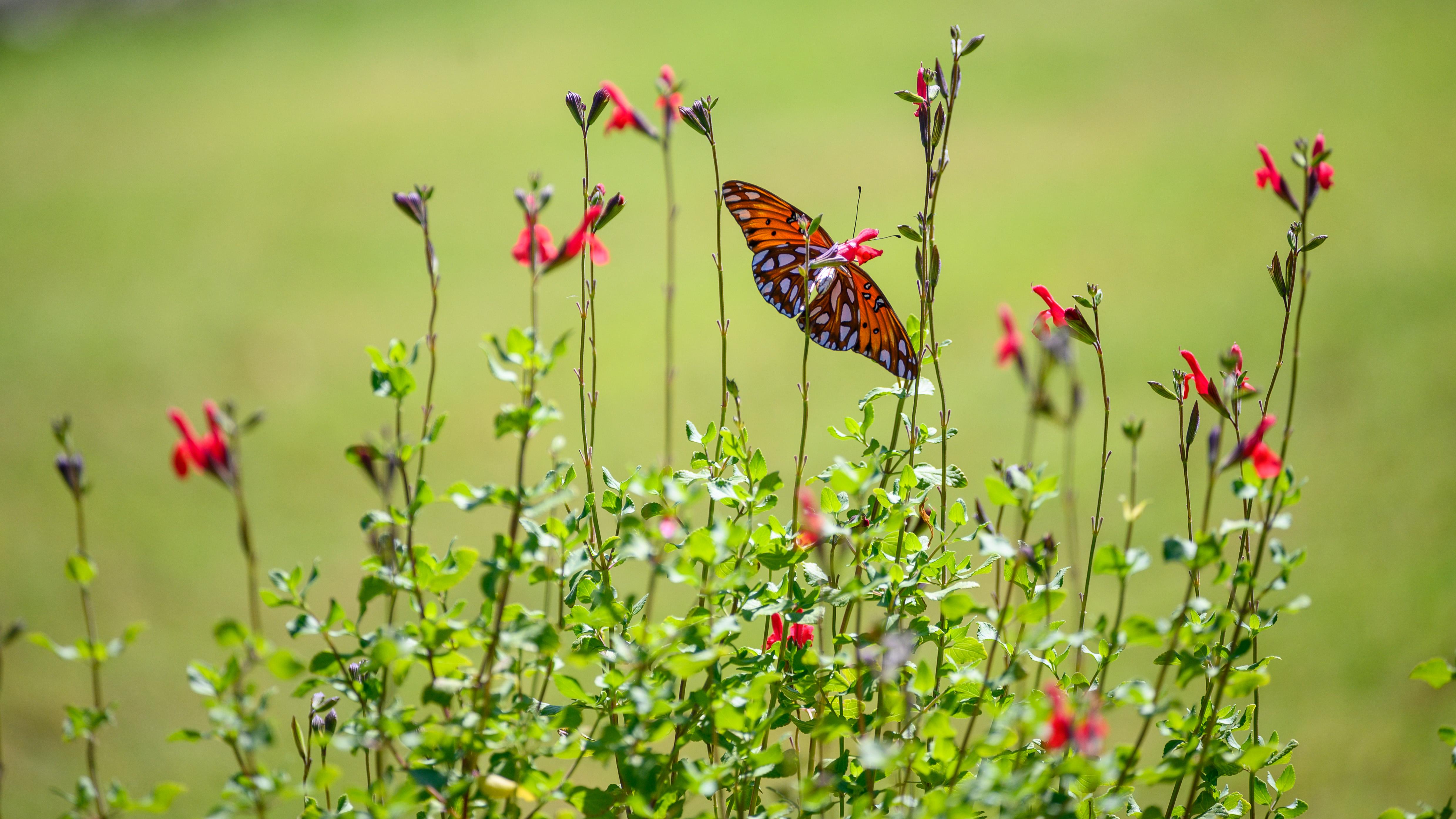 72812 скачать обои Животные, Перламутровая Бабочка, Бабочка, Растения, Цветы - заставки и картинки бесплатно